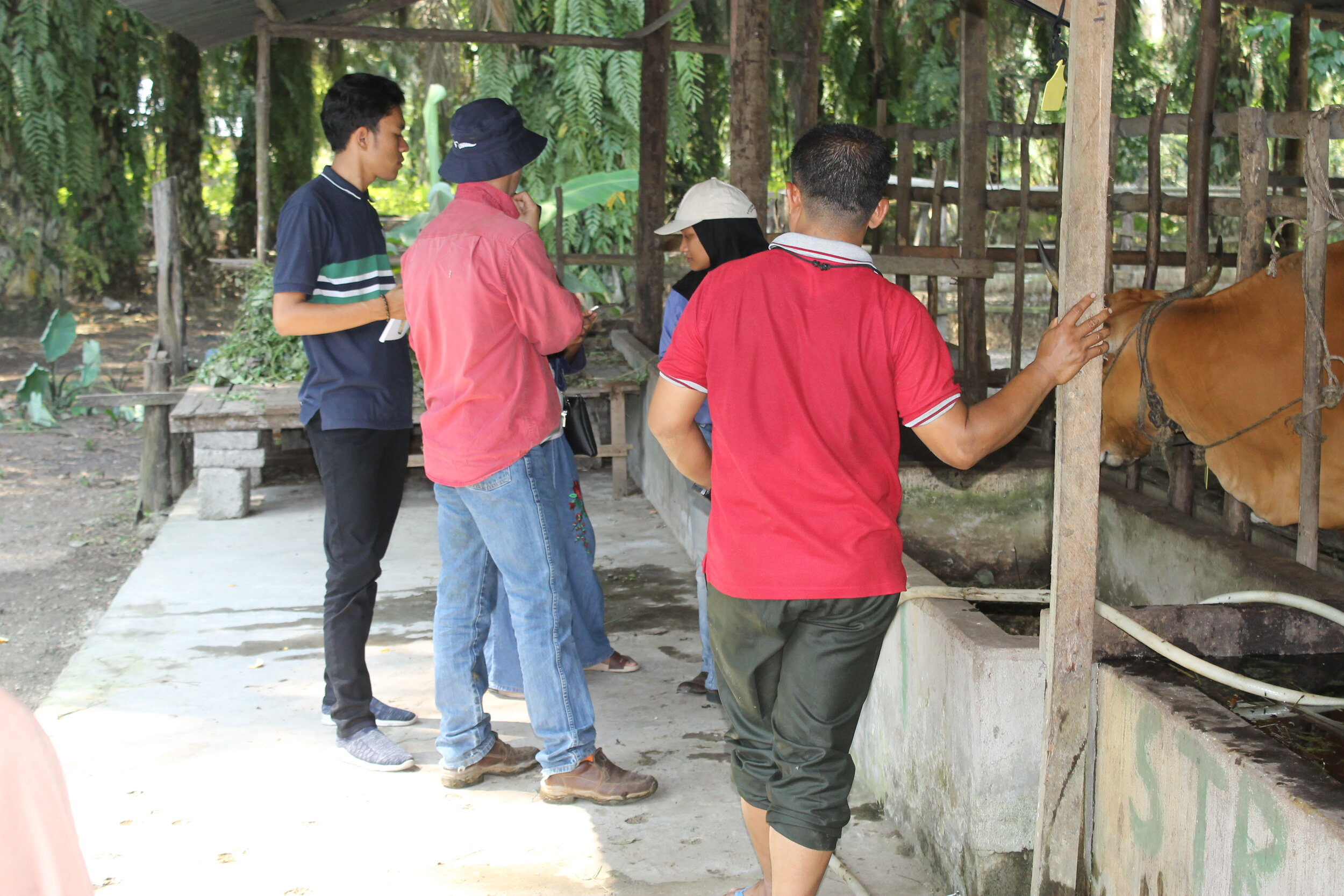The project team during animal enrolment activity in Riau, July 2019.  Photo: Arthur Cameron