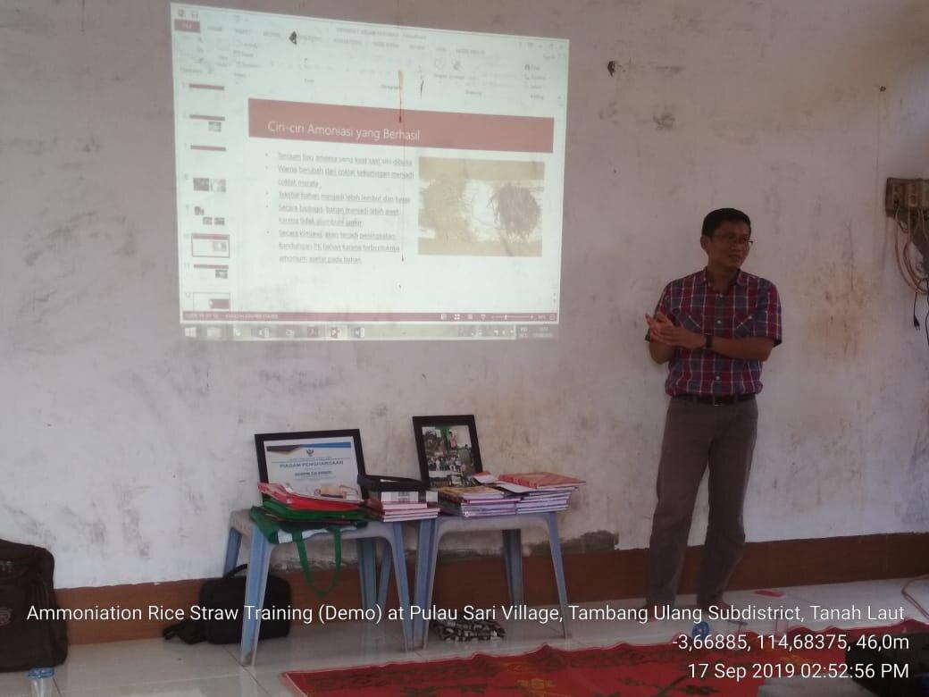 Dr Ika Sumantri (ULM) discusses the ammoniation process, Pulau Sari, KalSel, September 2019.  Photo: Ridhona Edriantina