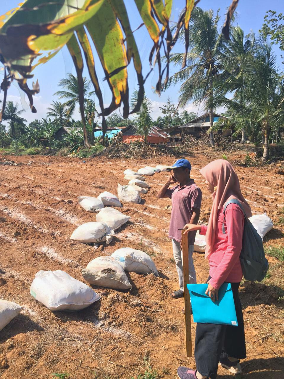 Surveying an odot grass planting site for animal feed, Pulau Sari village, KalSel, August 2019.  Photo: Ridhona Edriantina