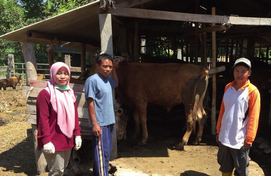 Cattle enrolment with Kebun Talaga farmer group.  Photo: Juaeratul Uyun