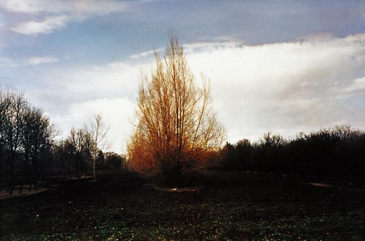 "Orange bushes   39"" x 26""  oil on c-print  2001"