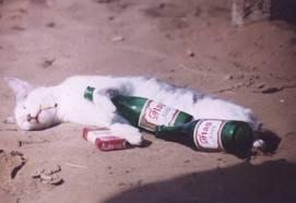 drunk_cat
