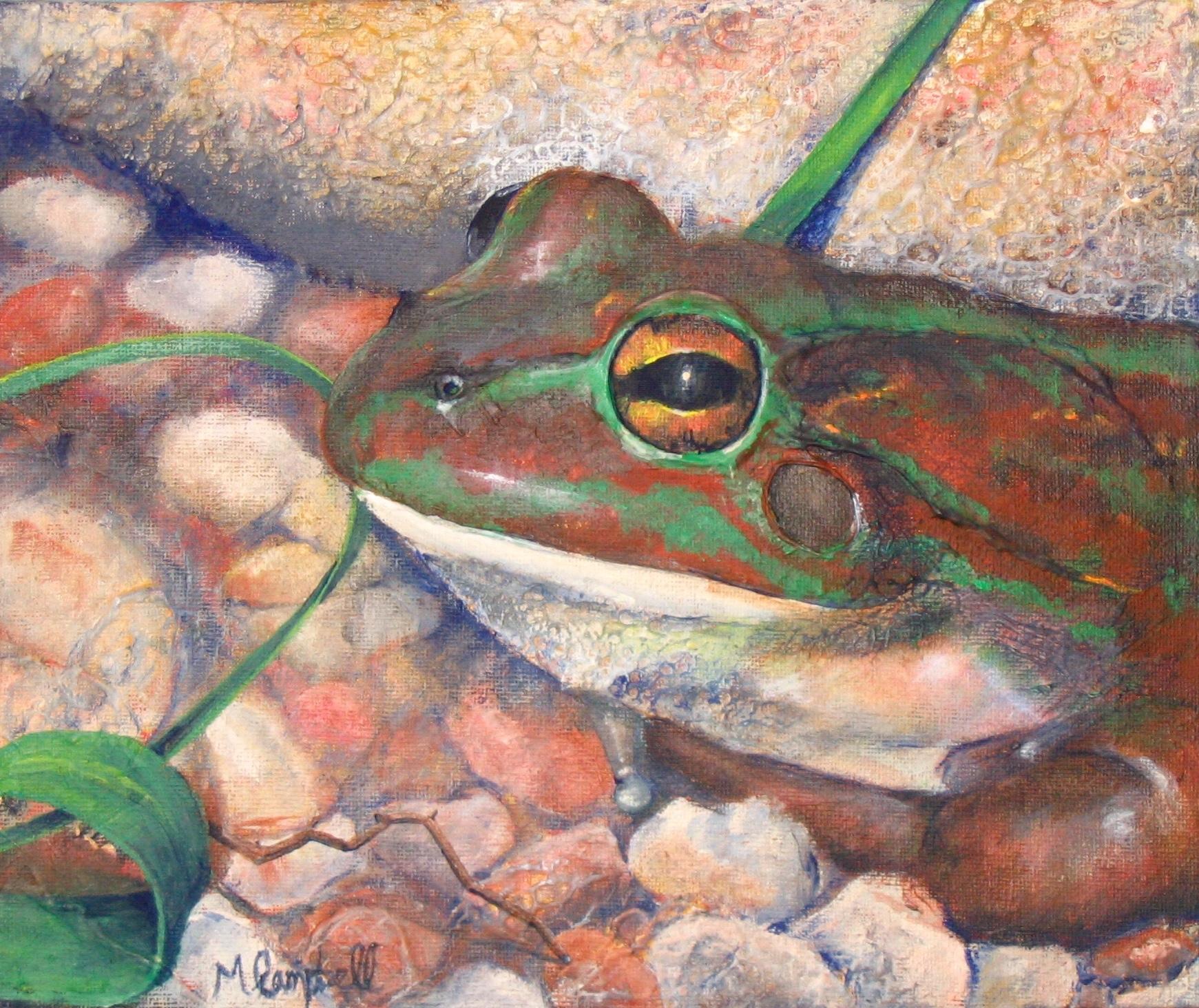 Frog, Healesville Sanctuary