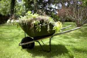 Wheelbarrow With weeds in it