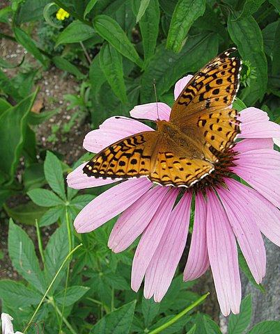 butterfly B Bader.jpg