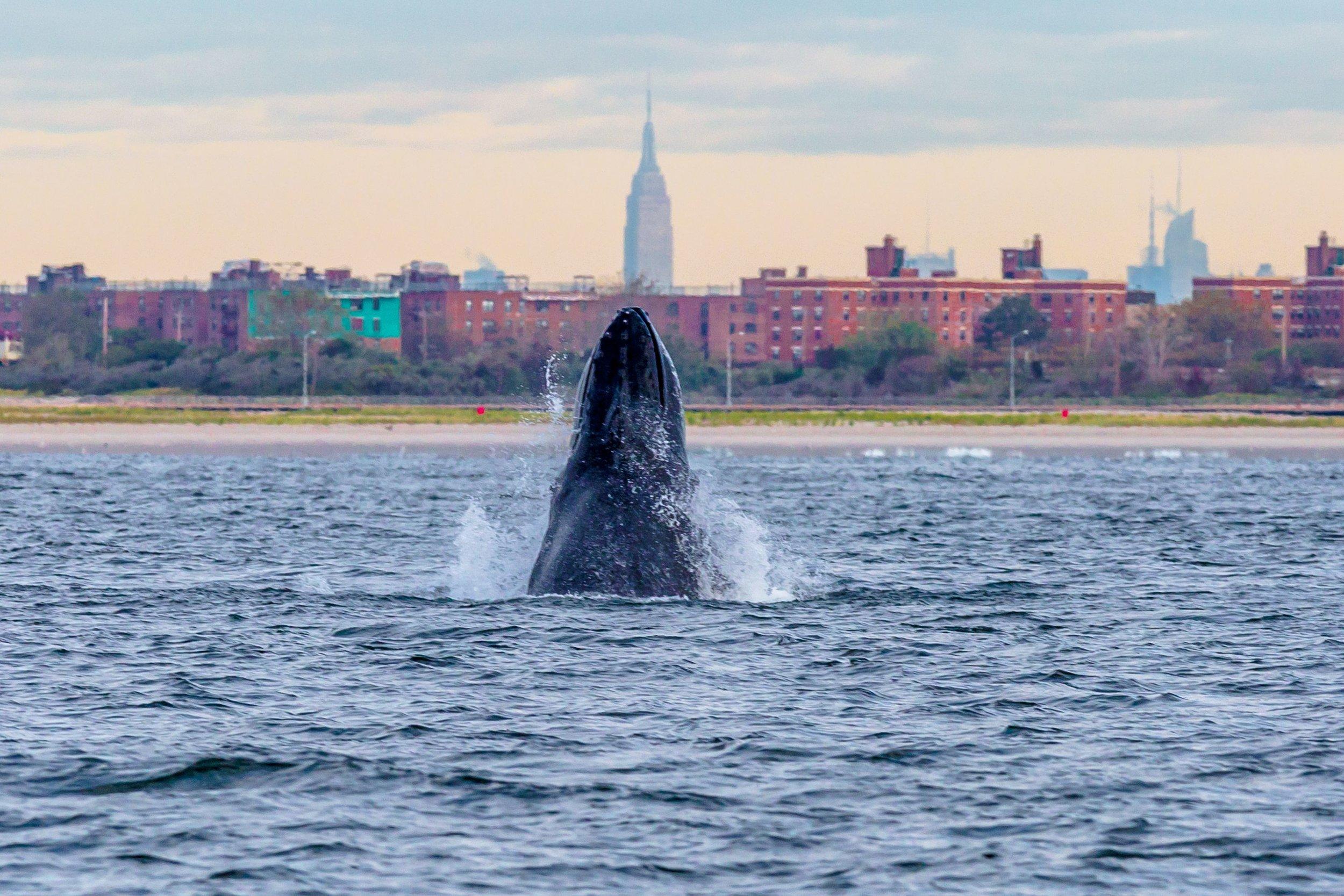 1496924002-balene-new-york.jpg
