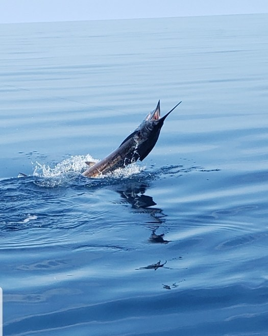 #sailfish #evinrude#powerpole#saltreaper
