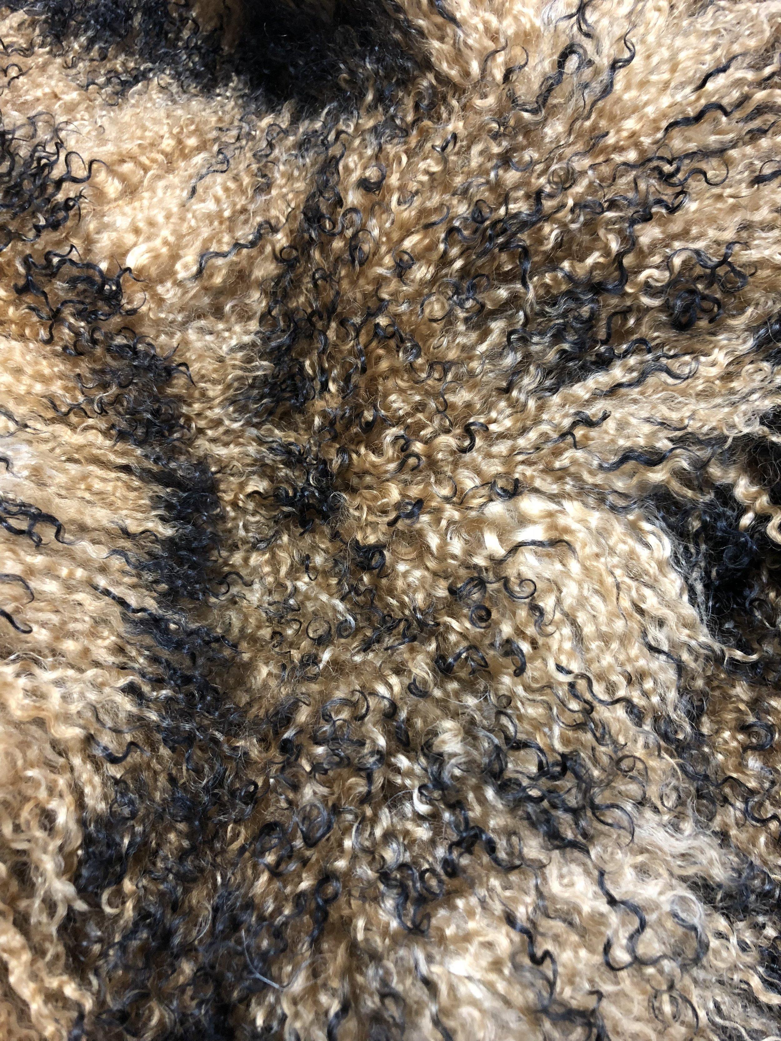Tibetan Coyote
