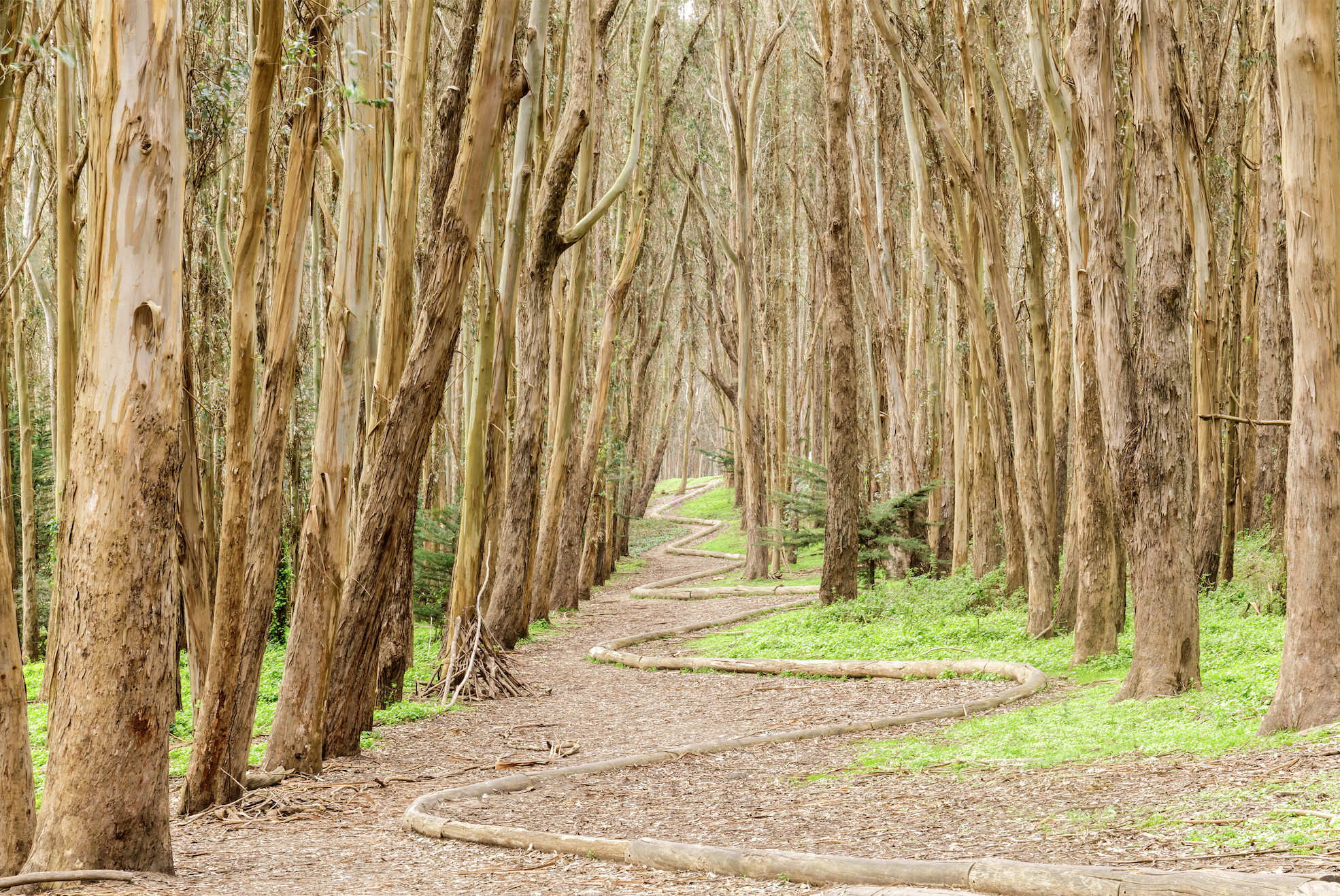 Natural Art: Woodline in the Presidio