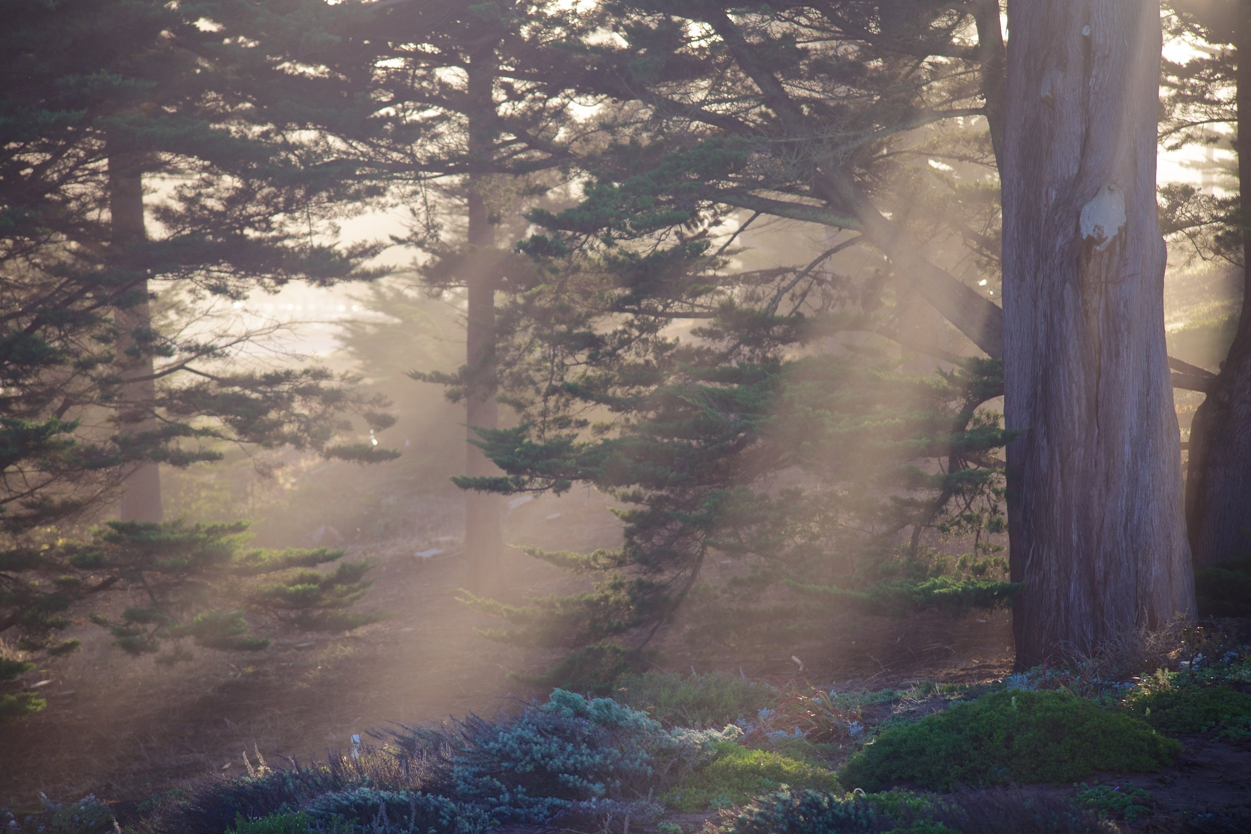 The tree-filtered light in the Presidio is a thing.