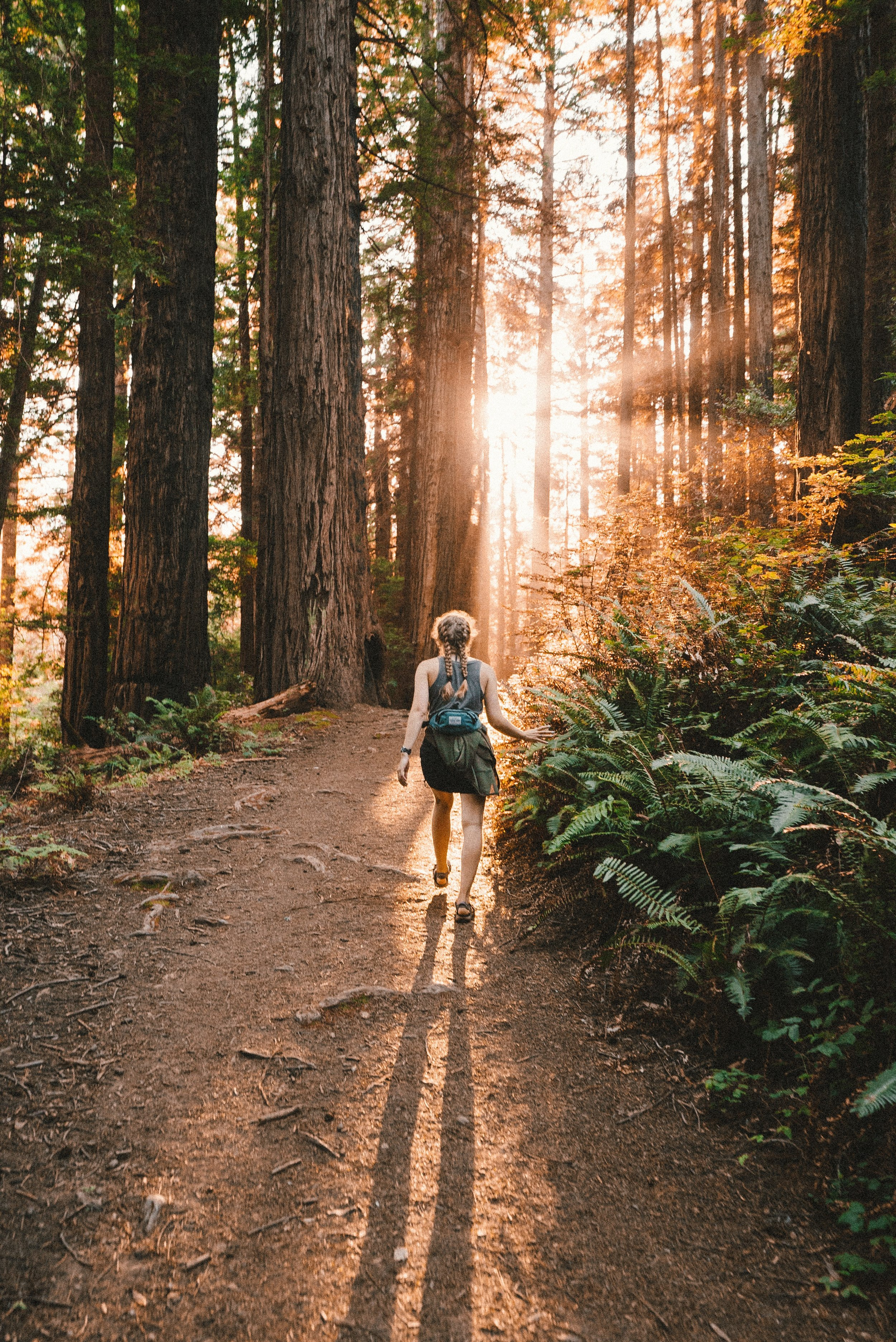 Muir Woods. Photo by  Kevin Wolf  on  Unsplash