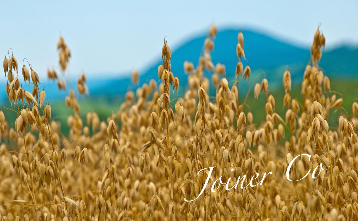 oats_NAME.jpg