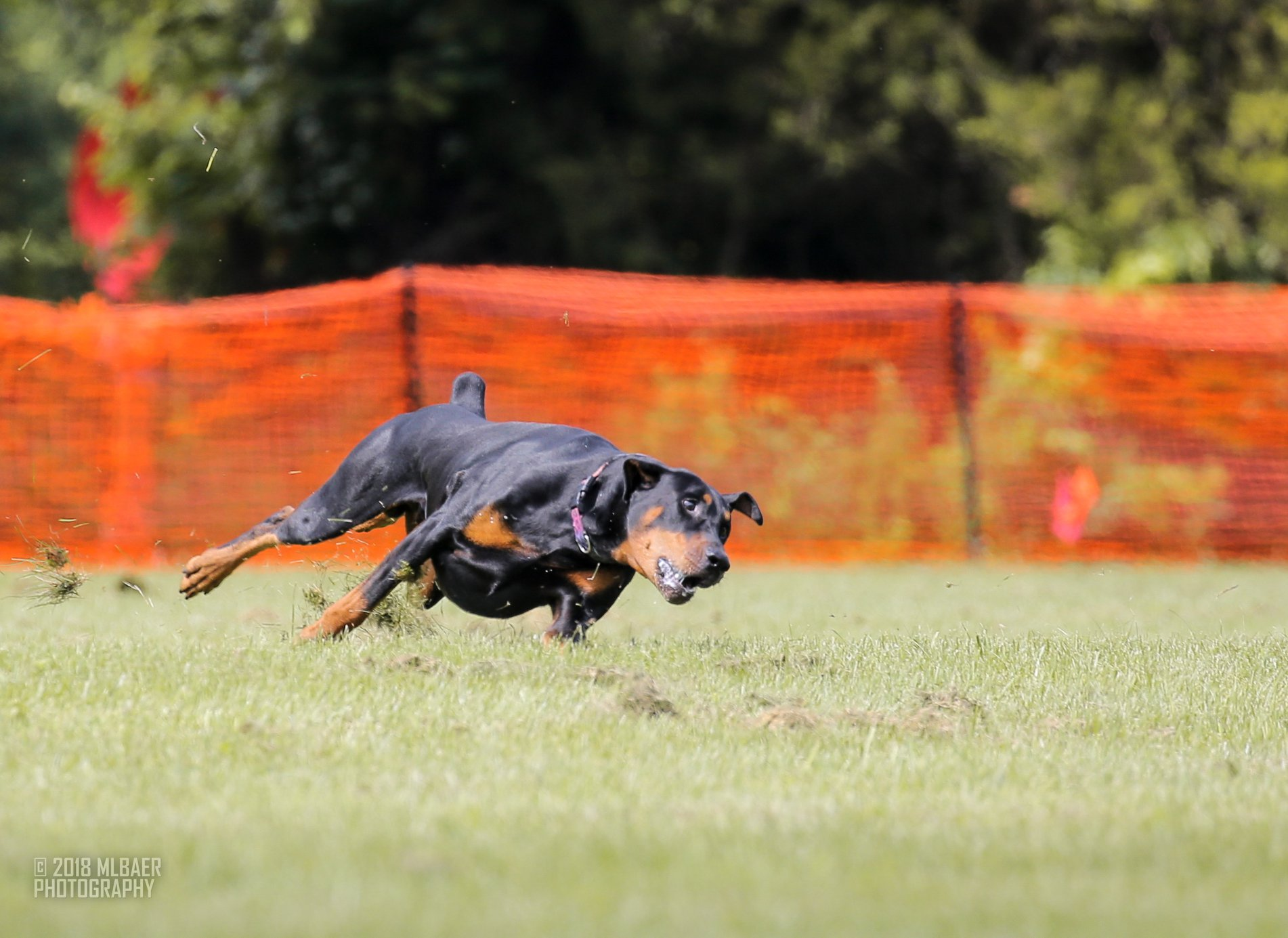 """""""Bogie"""" rounding a corner while coursing."""