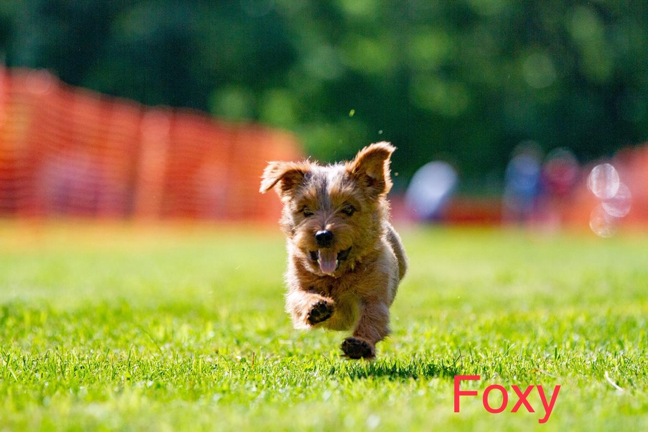 Foxyfastcat.jpg