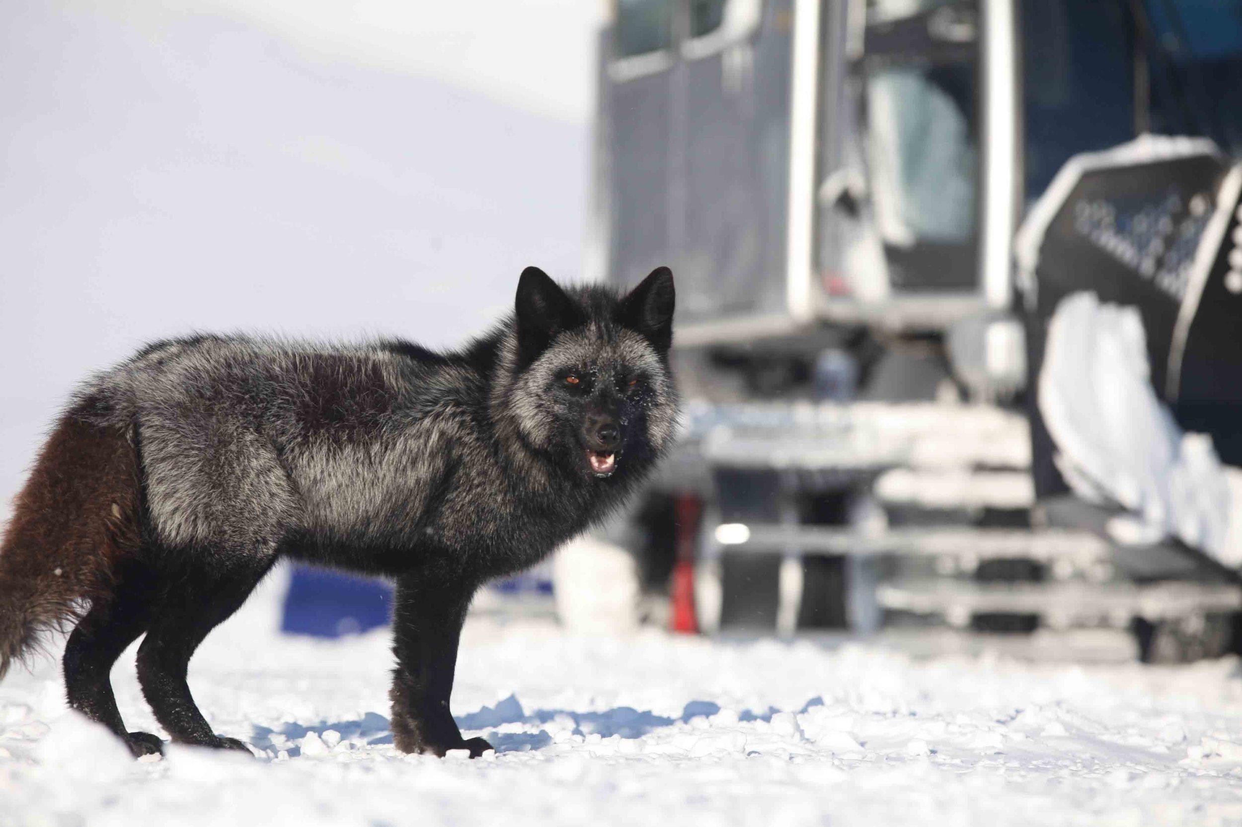 Wolf of Walstreet_-9.jpg