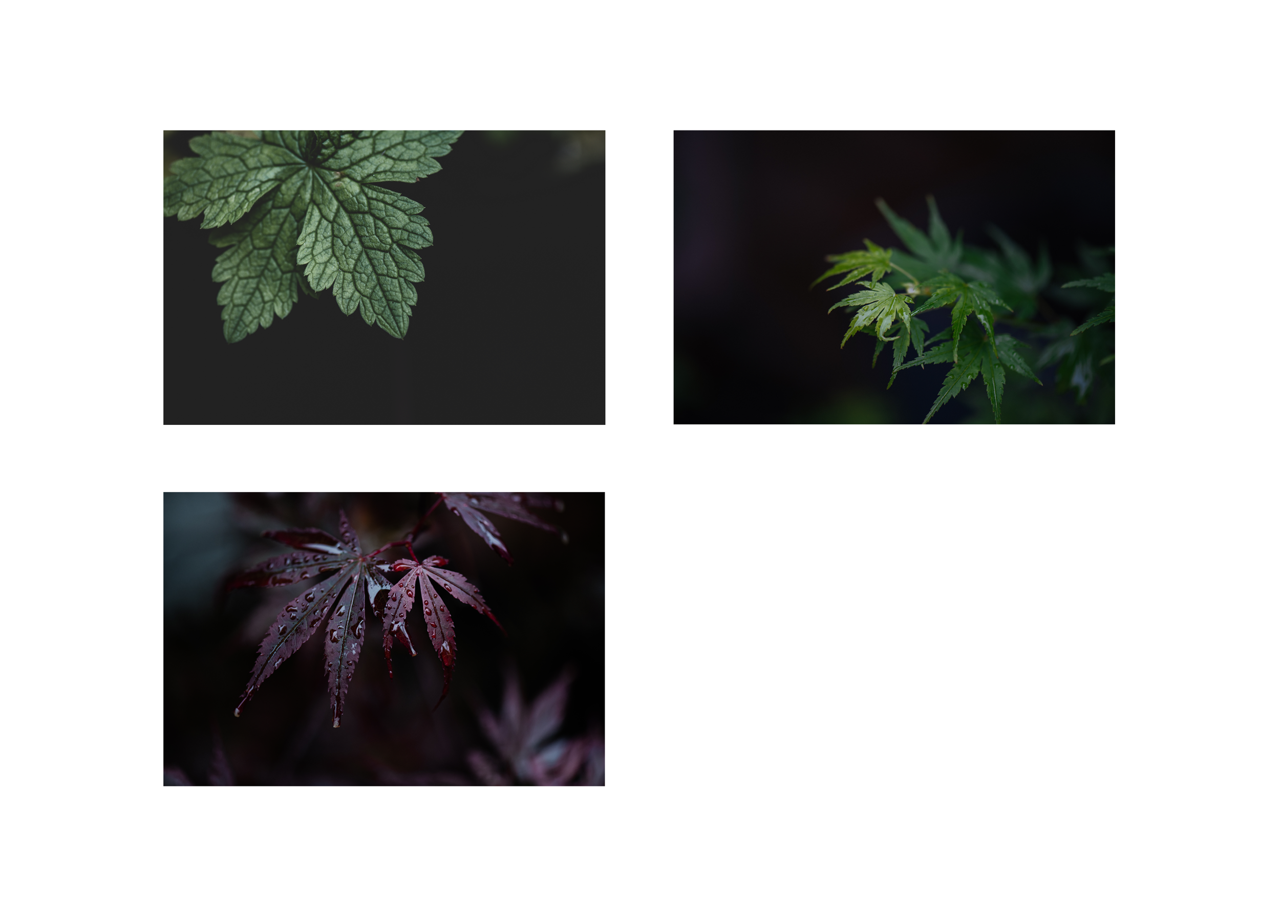 3 leaves.png