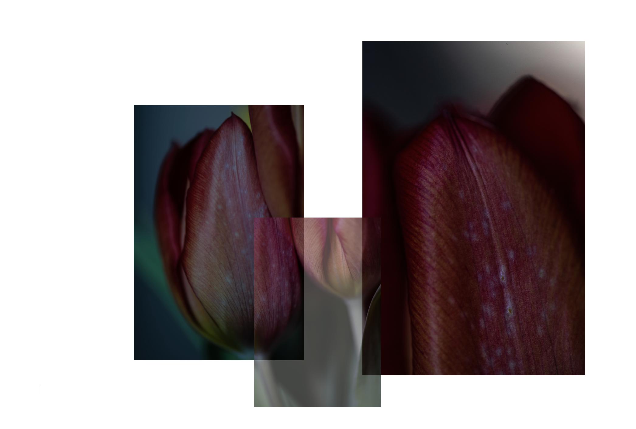 Screen Shot 2019-04-17 at 14.17.10.png
