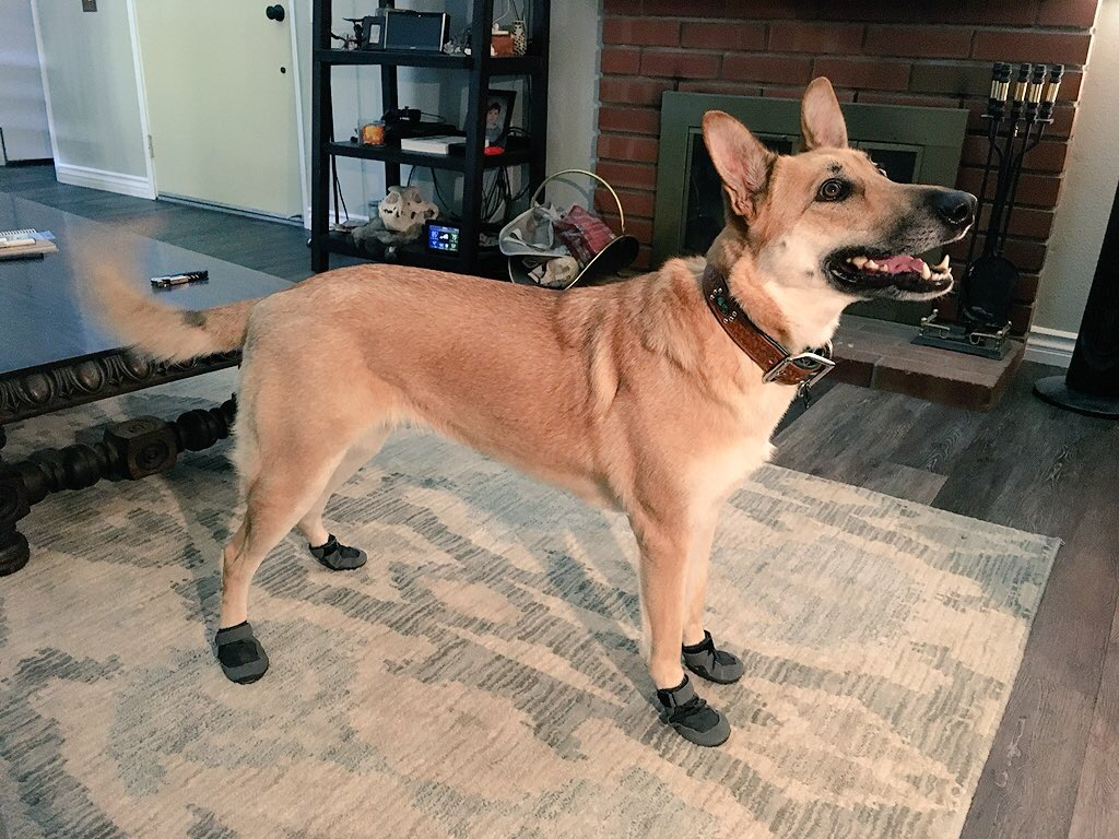 Dog shoes for hot weather: The paws that refreshes!