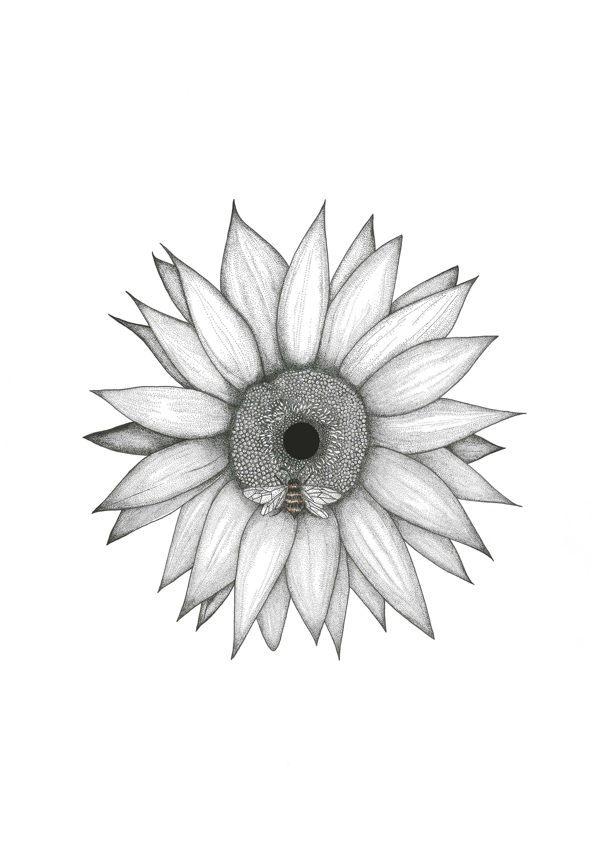 Sunflower-2017.jpg
