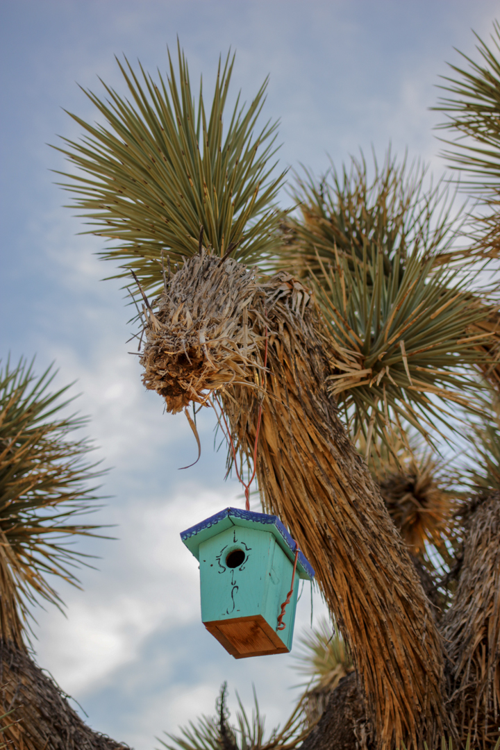 Birds bring life to the park. Photo by    Alexandra Charitan   .