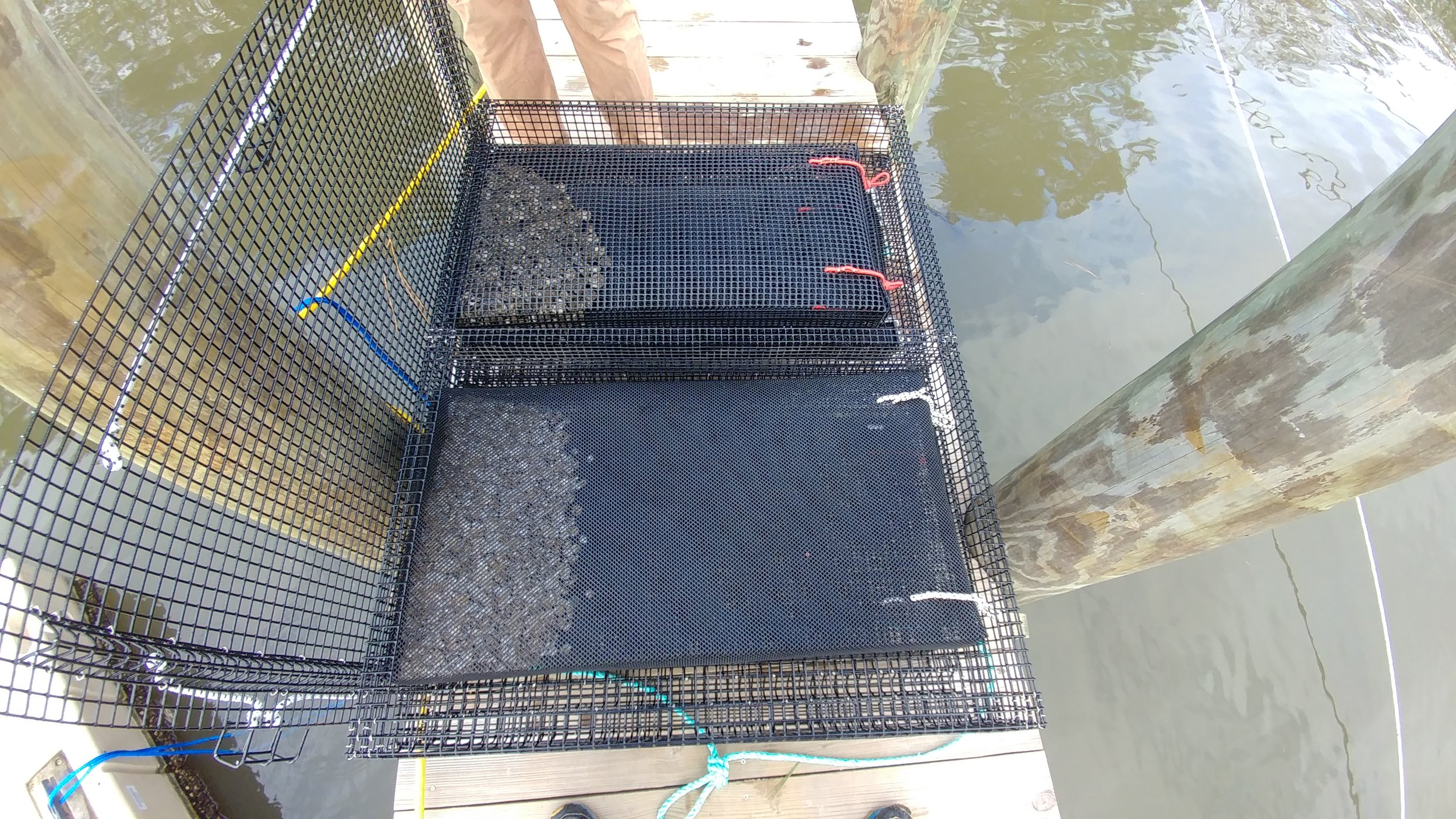 Bottom Cages with Bags