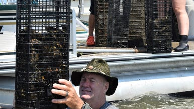 Growing oysters: Delaware's new farmland is Underwater… -