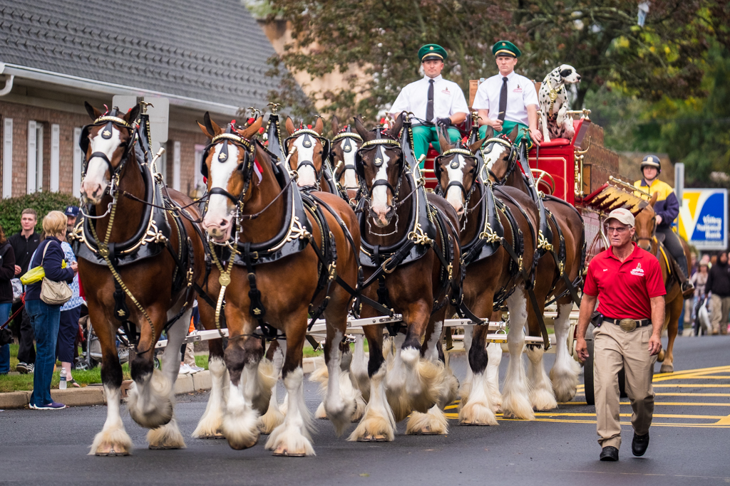 Hillsdale, NJ - Oct. 13, 2016:  Budweiser Clydesdales make beer deliveries at several local watering holes.