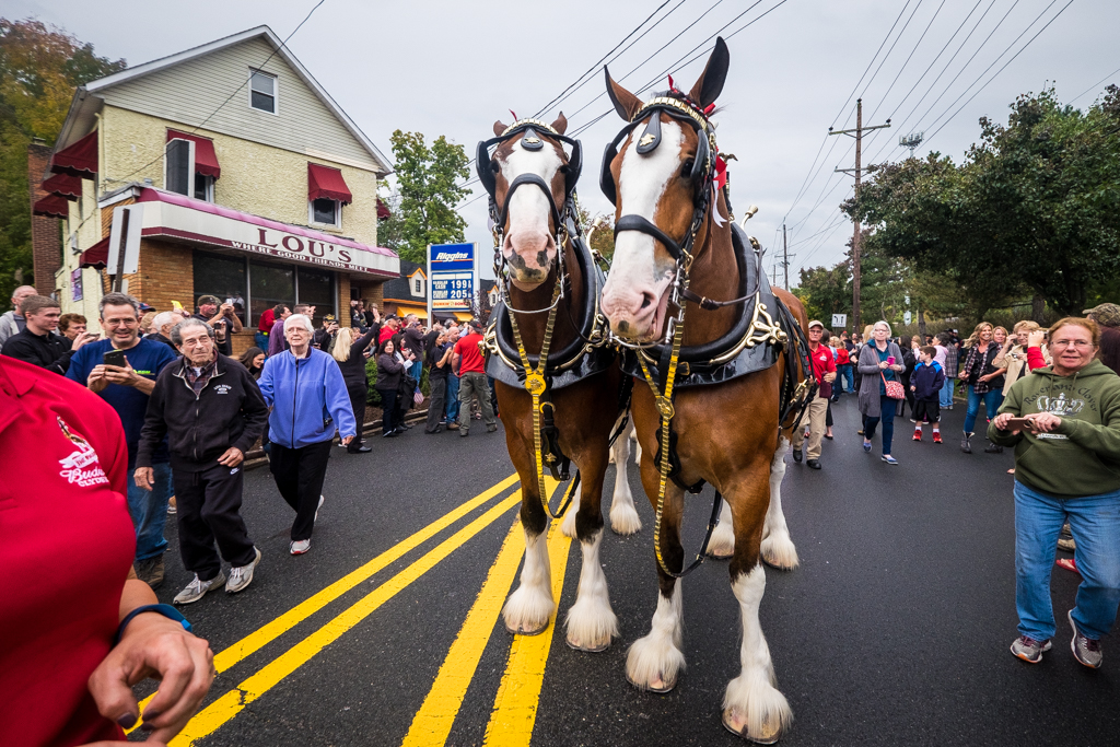 Hillsdale, NJ - Oct. 13, 2016: Budweiser Clydesdales make beer deliveries at several local watering holes, including Lou's Tavern.