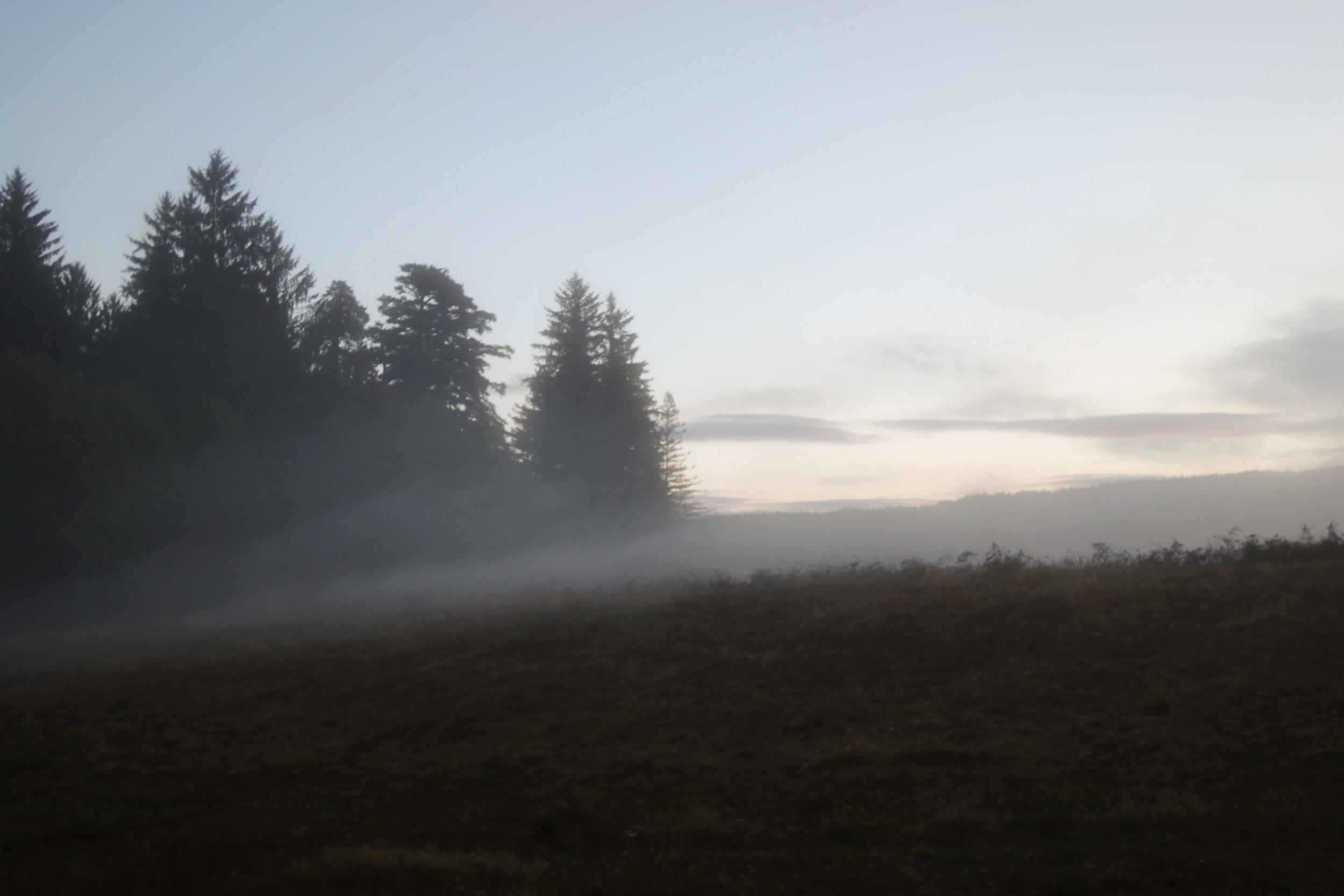 2018_Redwood_day2-9.jpg