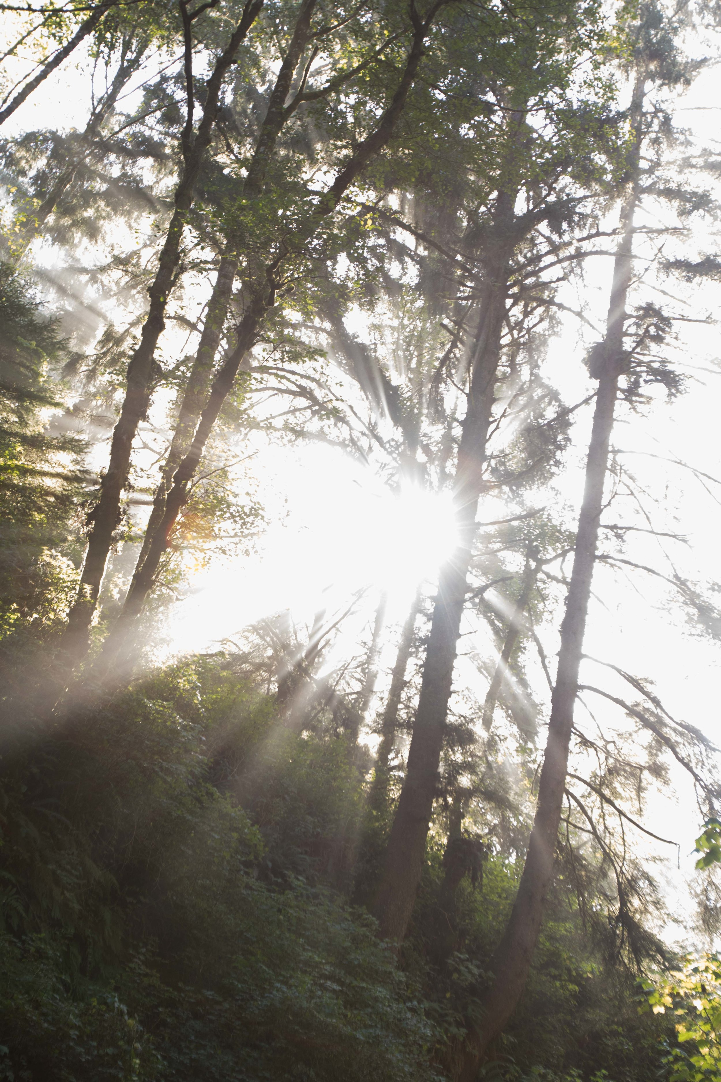 2018_Redwood_day2-44.jpg