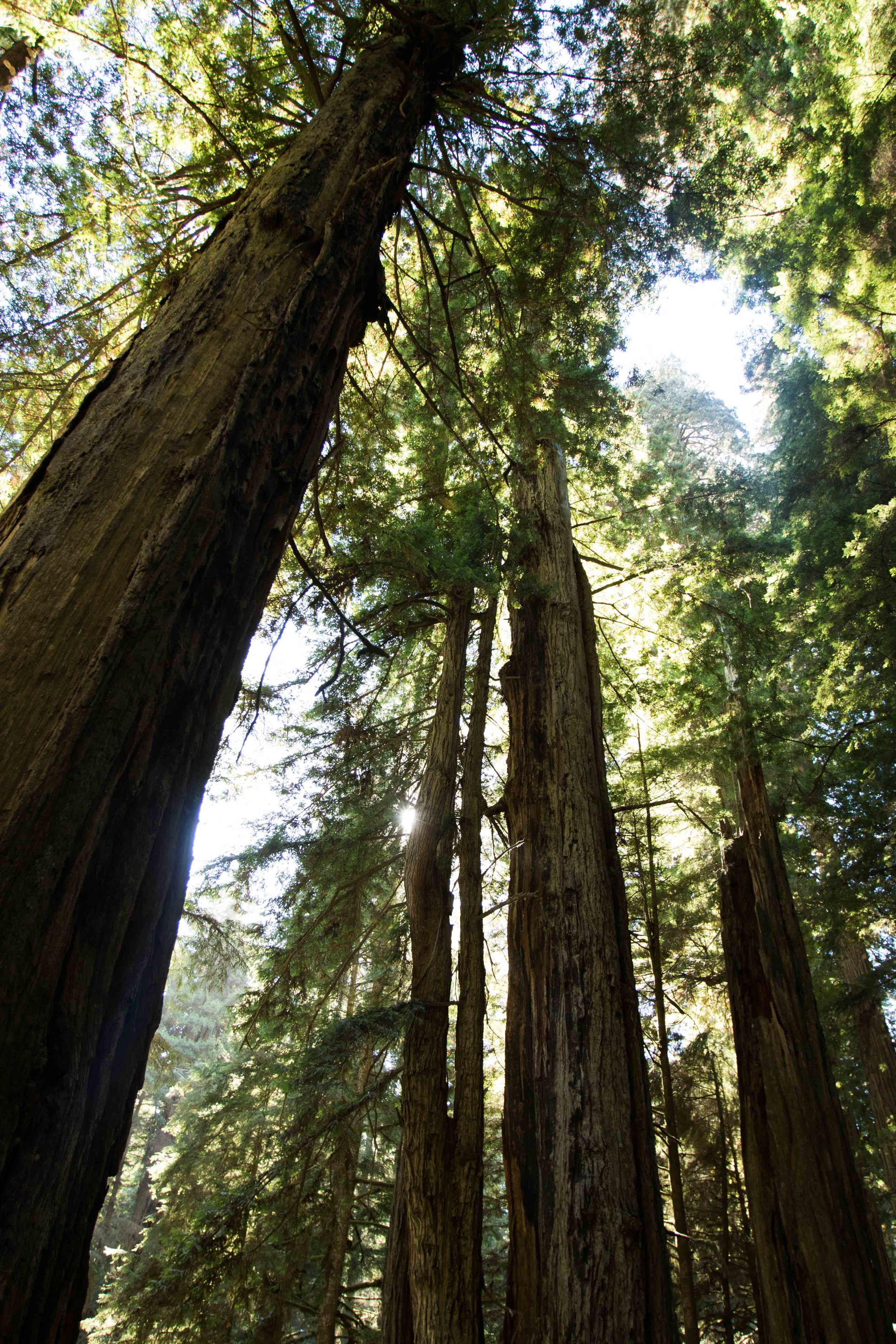 2018_Redwood-15.jpg