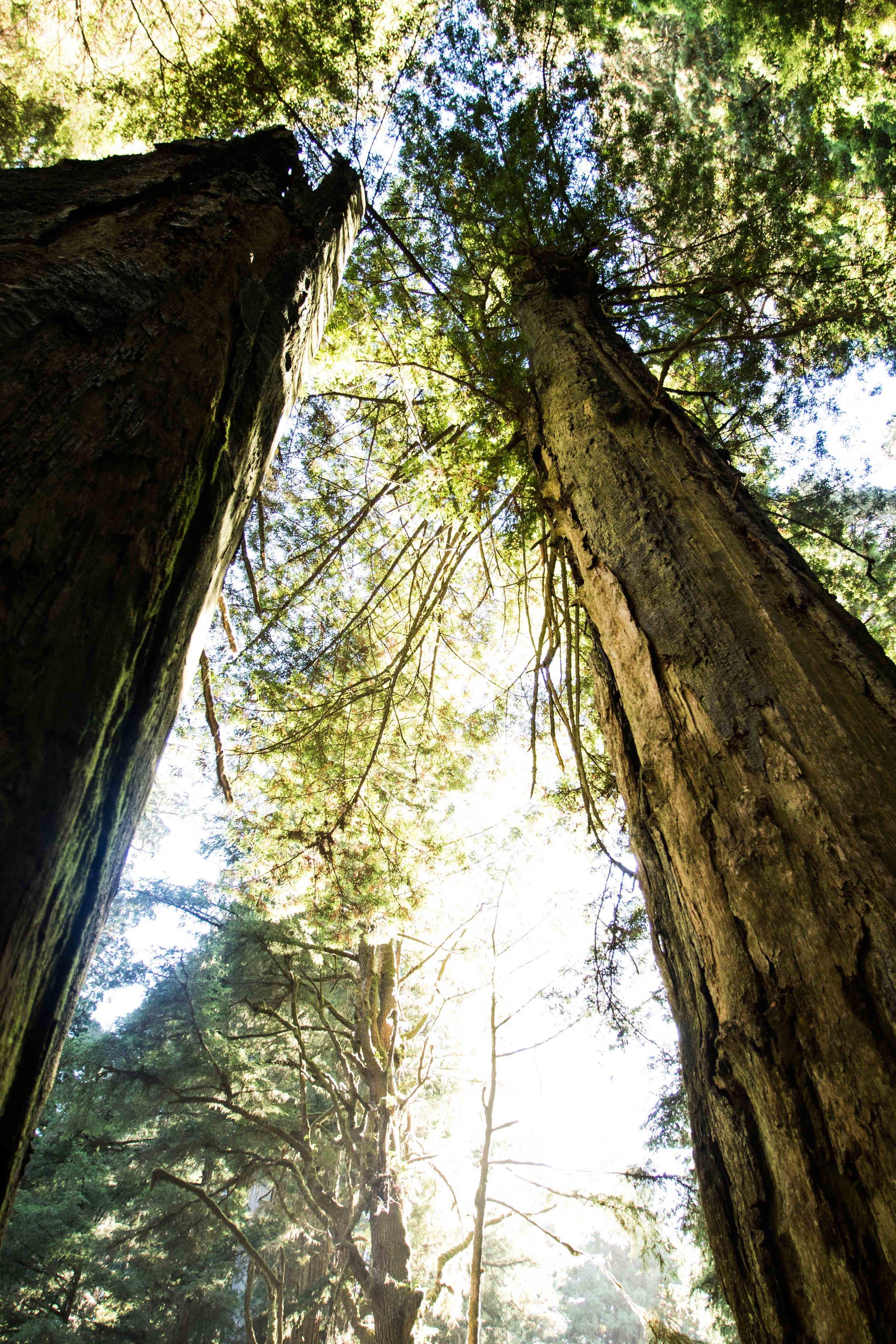 2018_Redwood-16.jpg