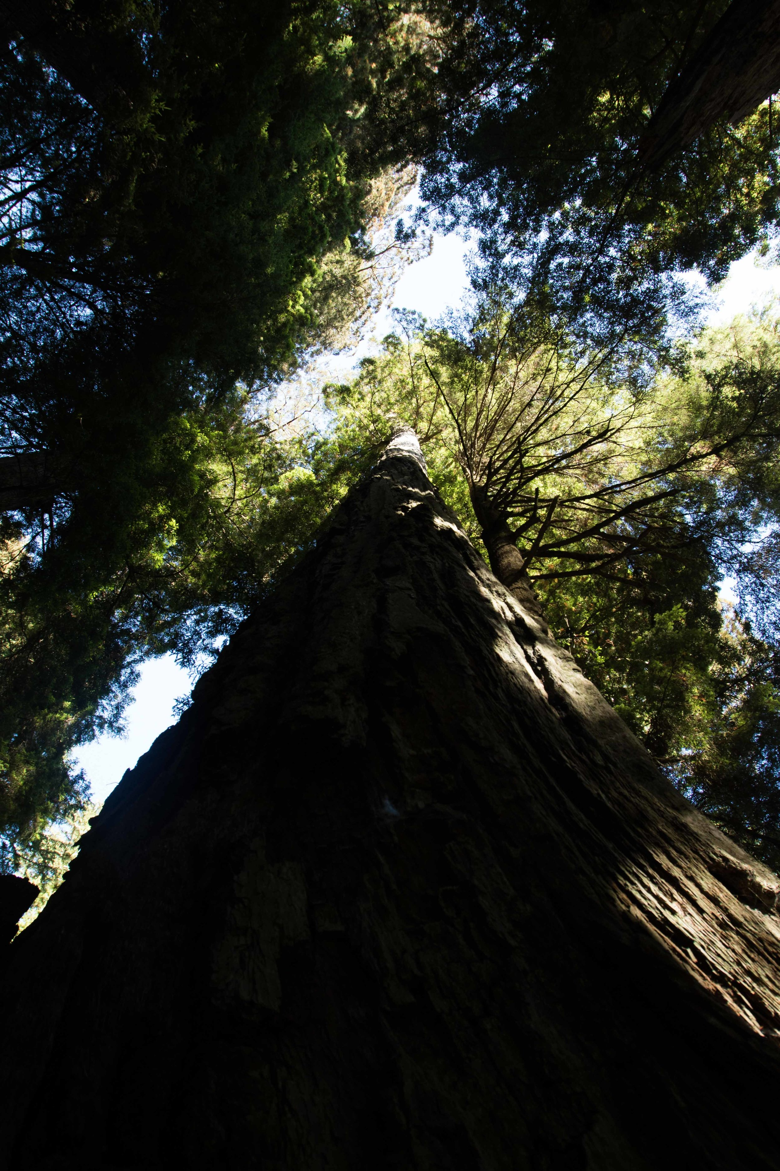 2018_Redwood-17.jpg