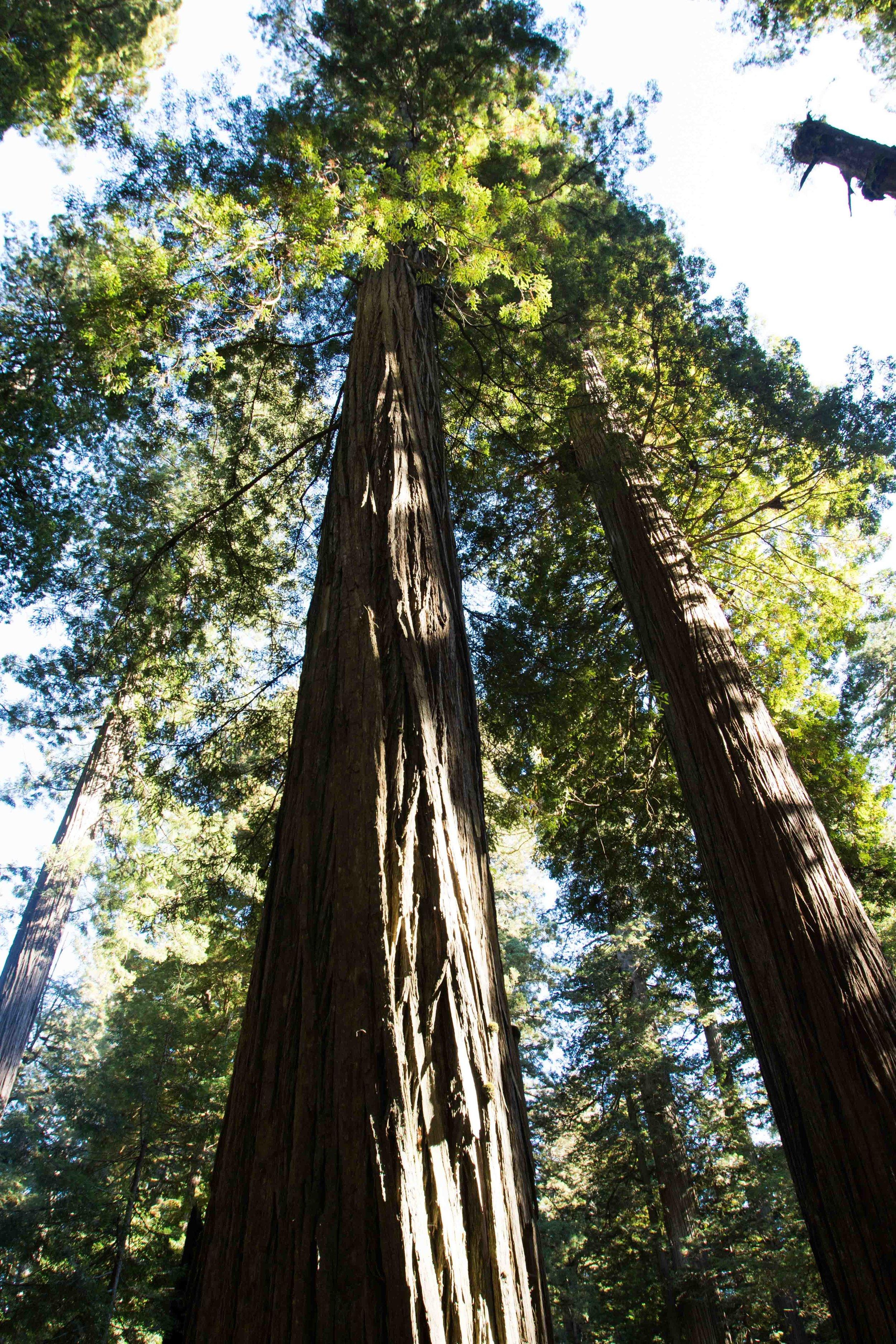 2018_Redwood-18.jpg