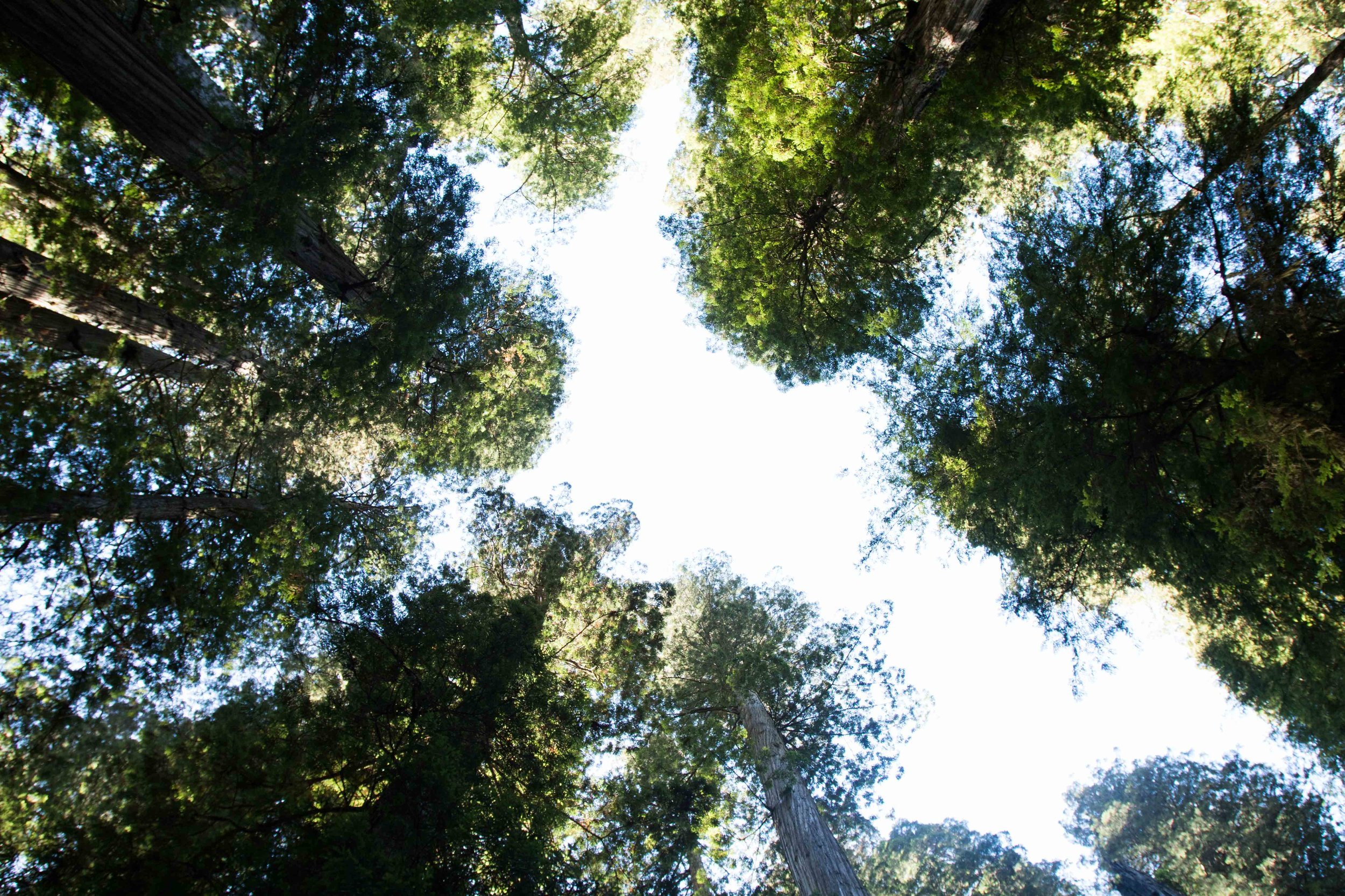 2018_Redwood-21.jpg