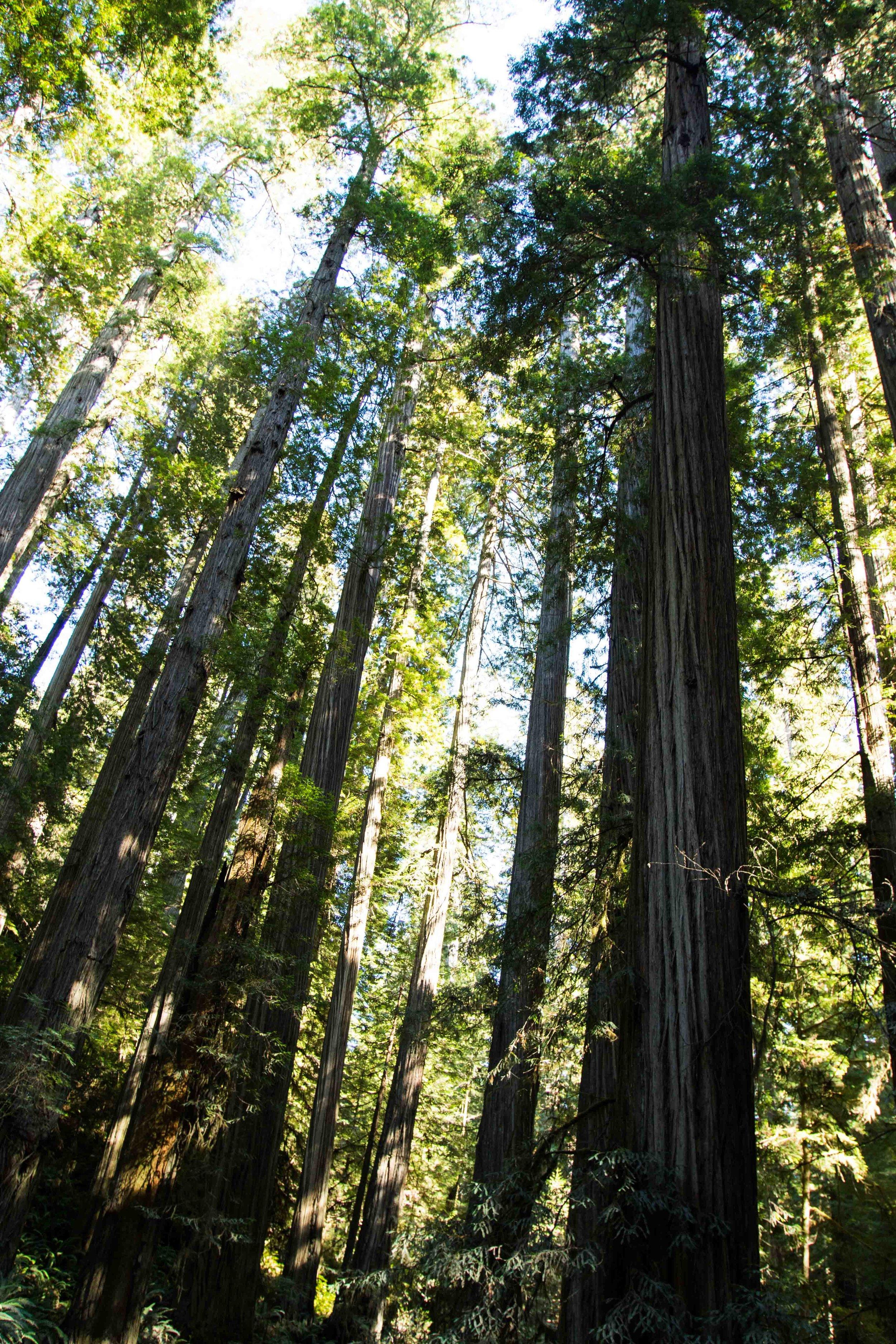 2018_Redwood-24.jpg