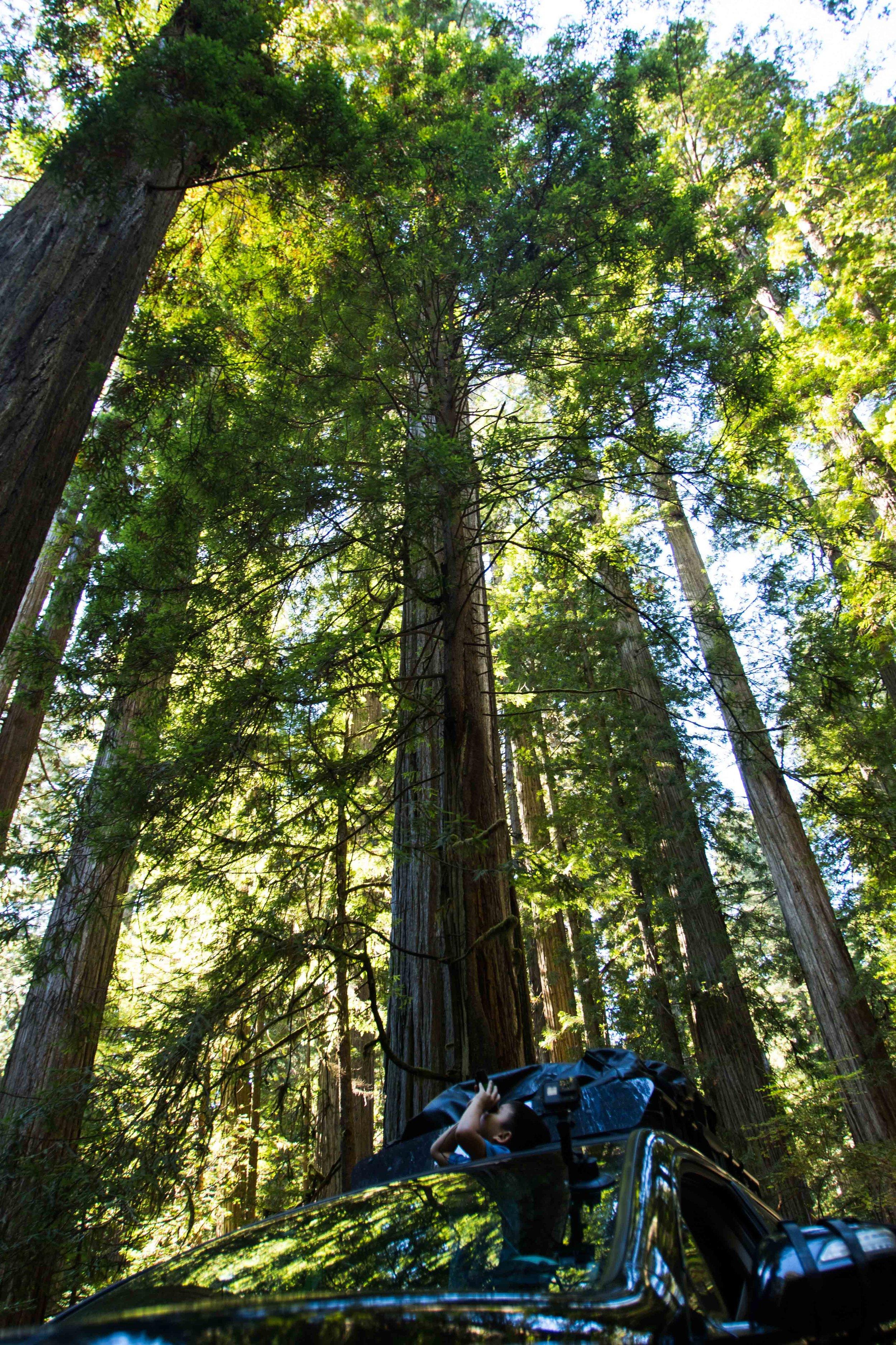 2018_Redwood-25.jpg