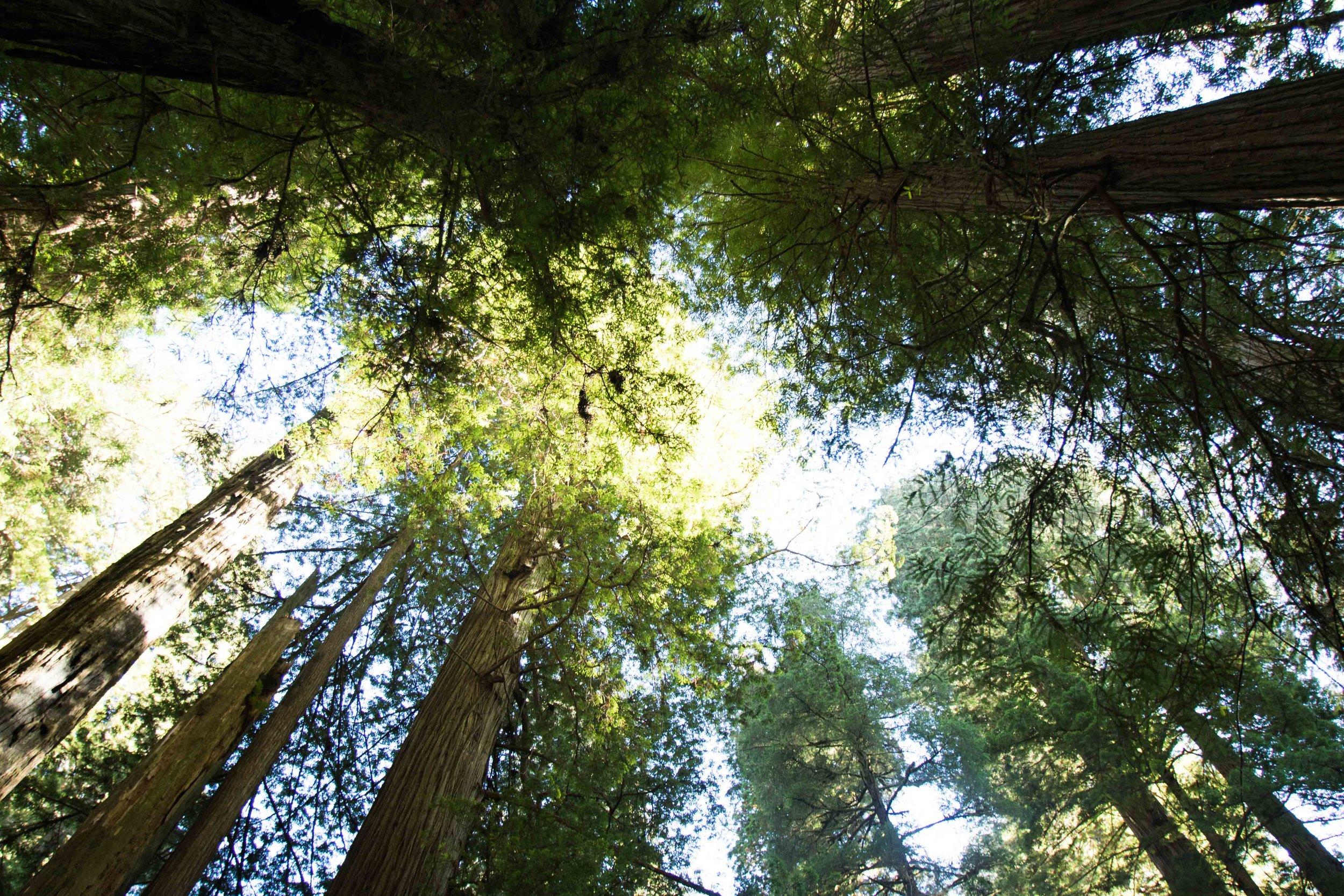 2018_Redwood-28.jpg