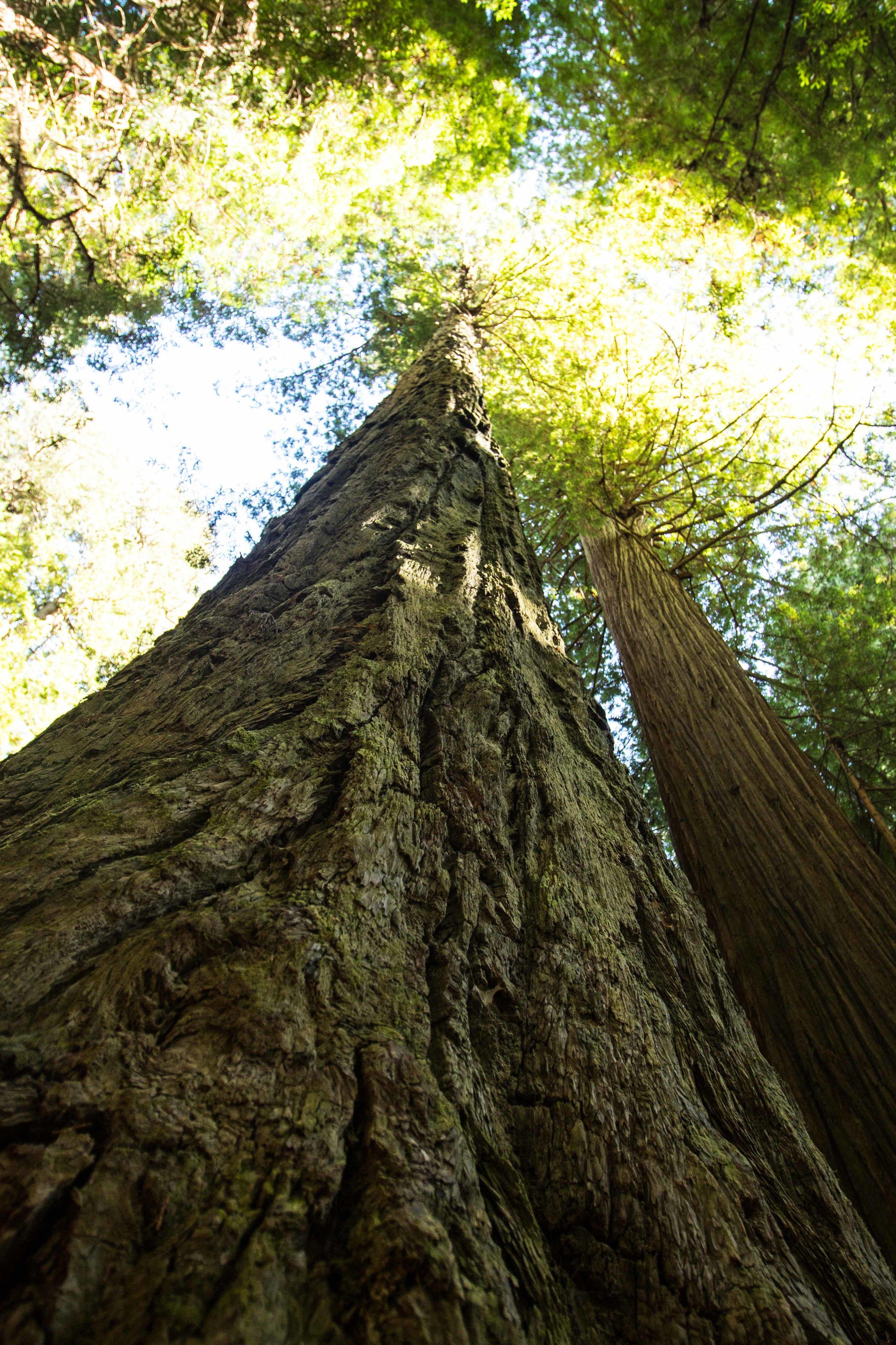 2018_Redwood-29.jpg