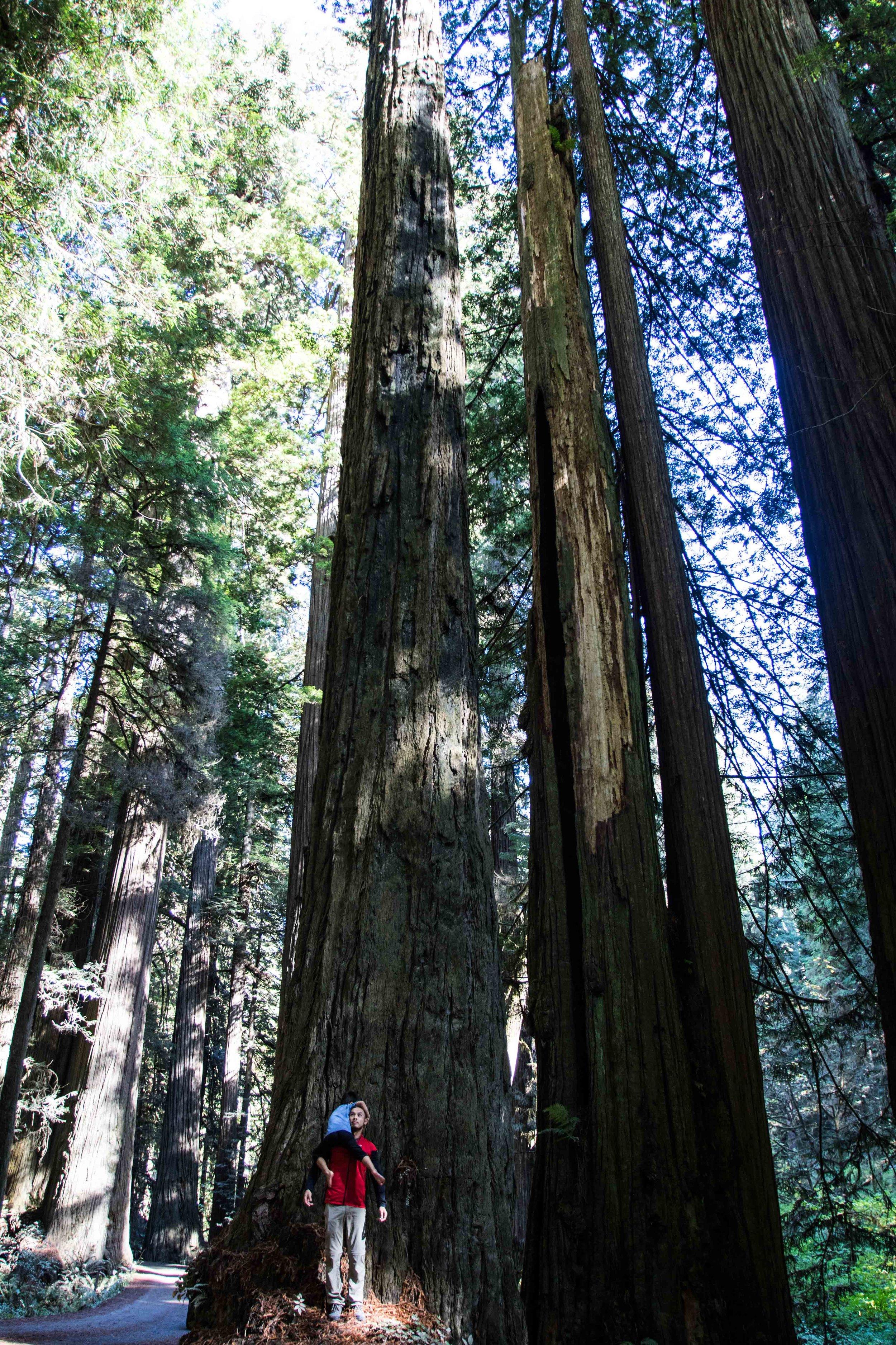 2018_Redwood-31.jpg