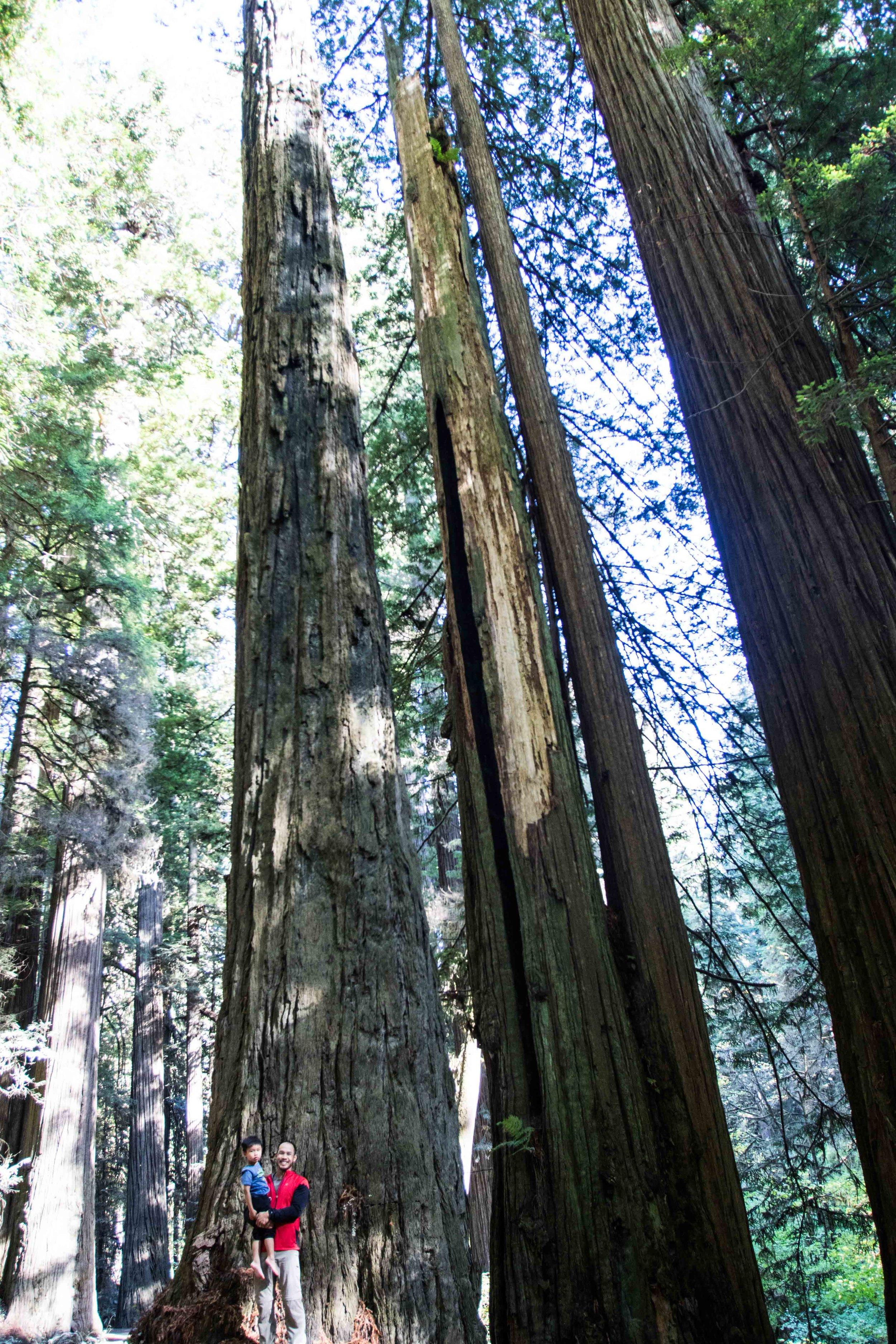 2018_Redwood-32.jpg