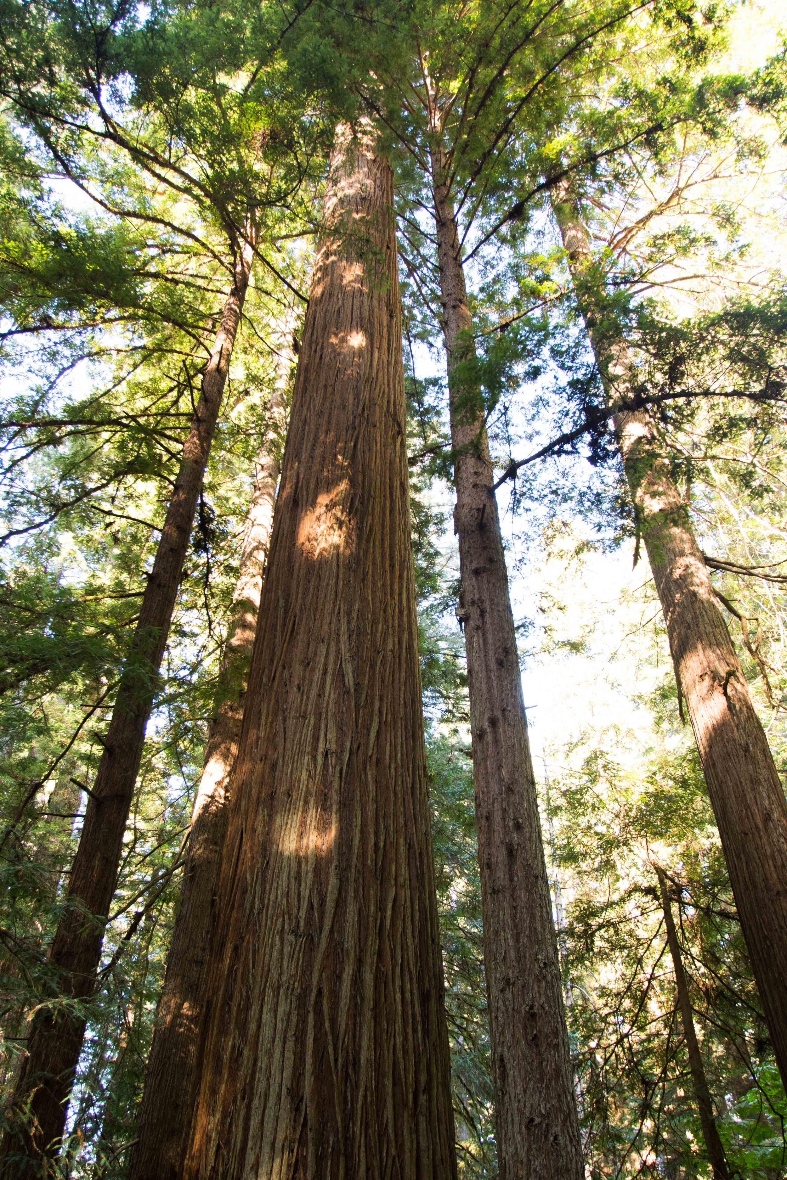2018_Redwood-38.jpg