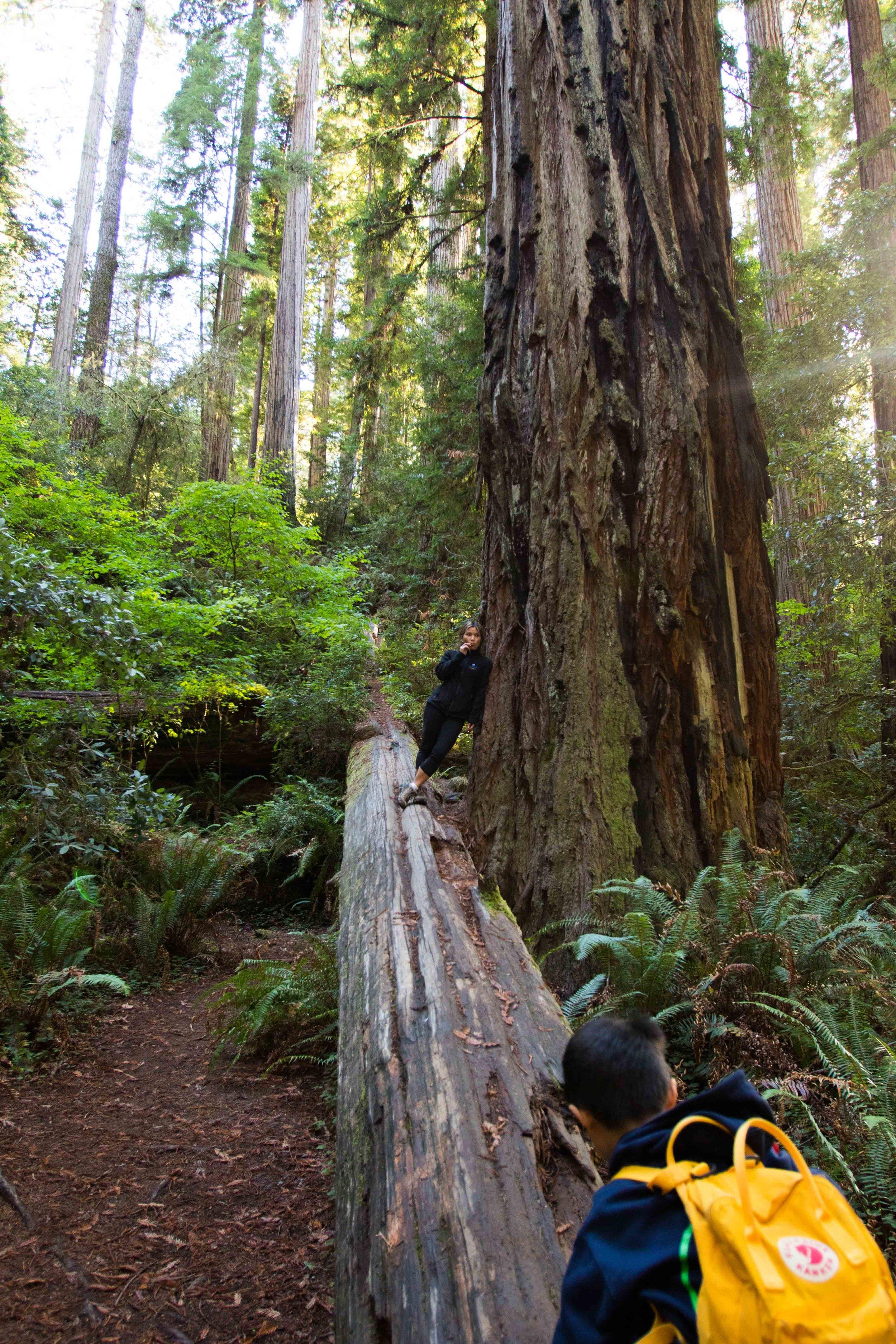 2018_Redwood-42.jpg
