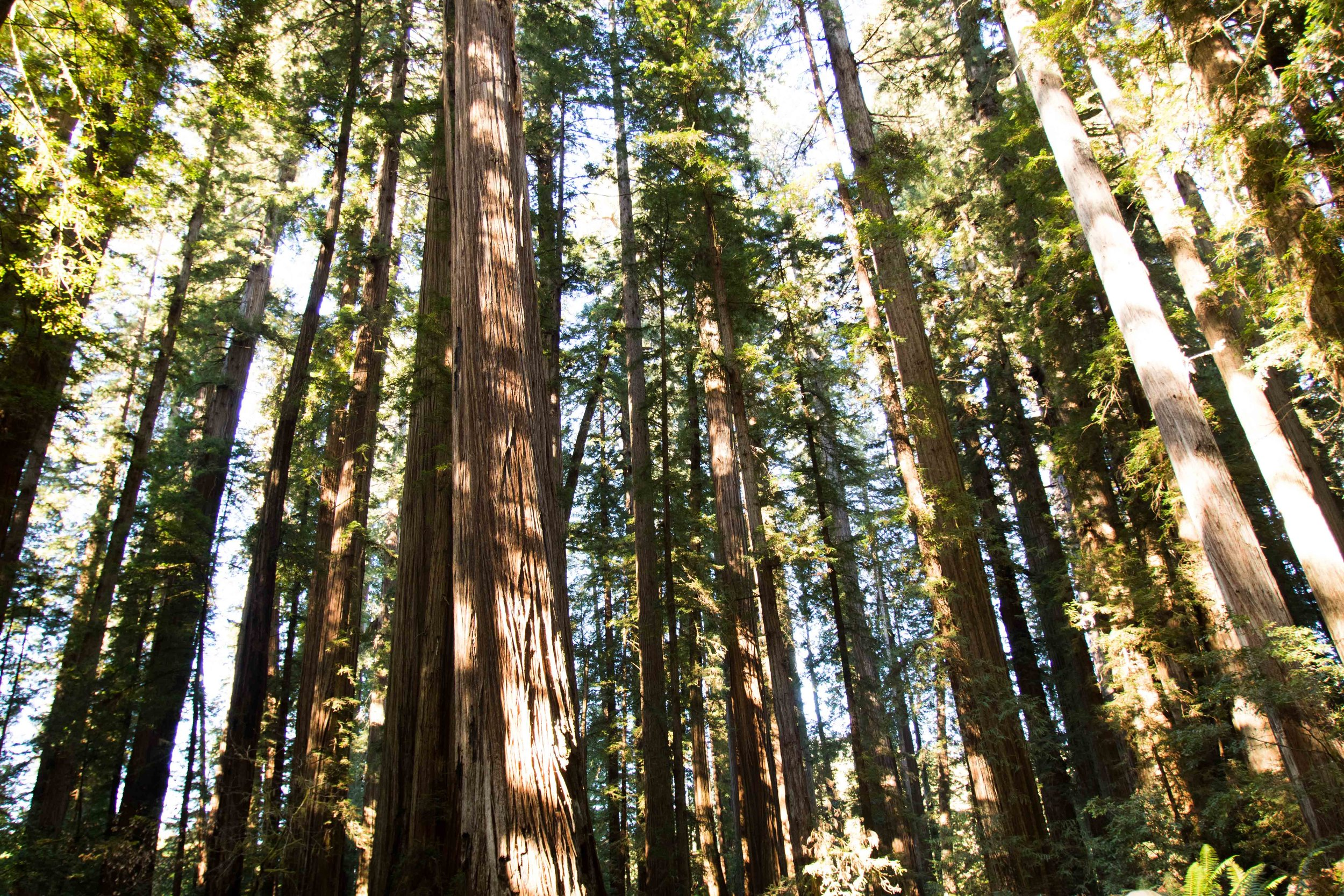 2018_Redwood-41.jpg