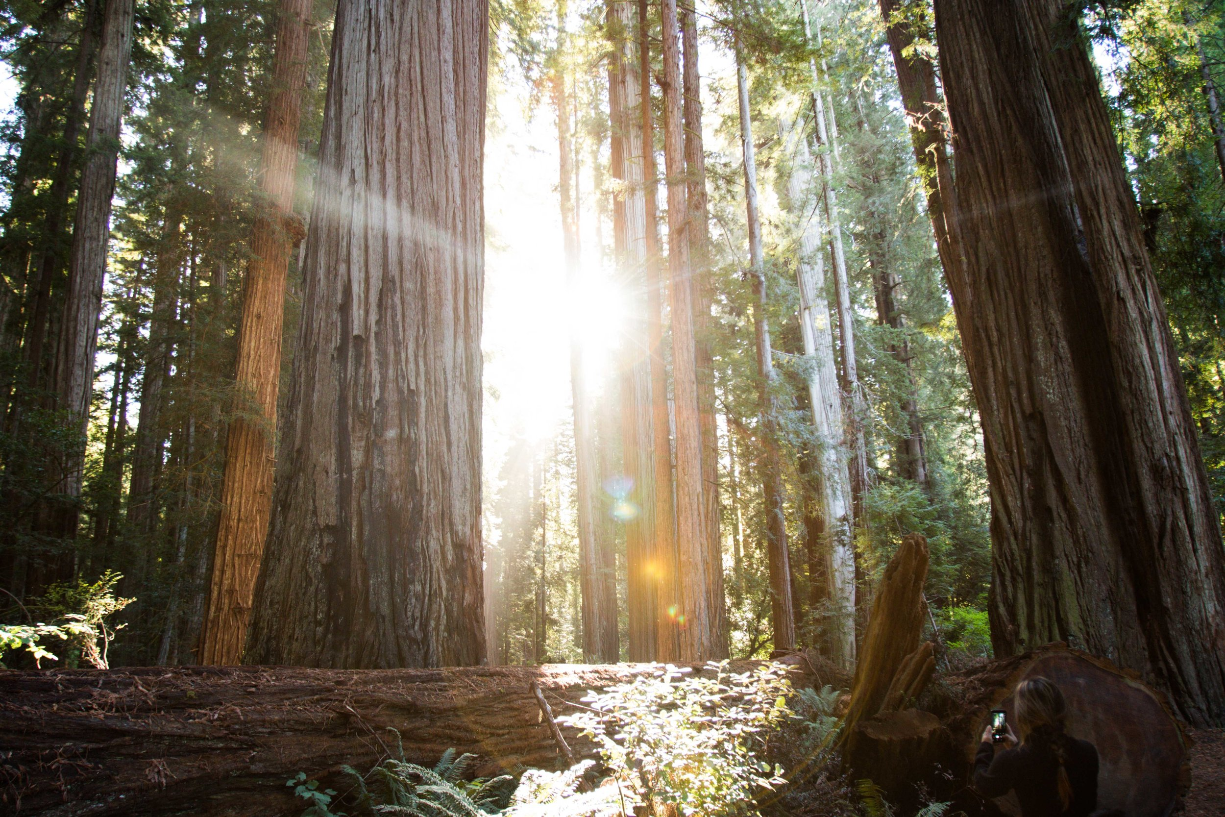 2018_Redwood-60.jpg