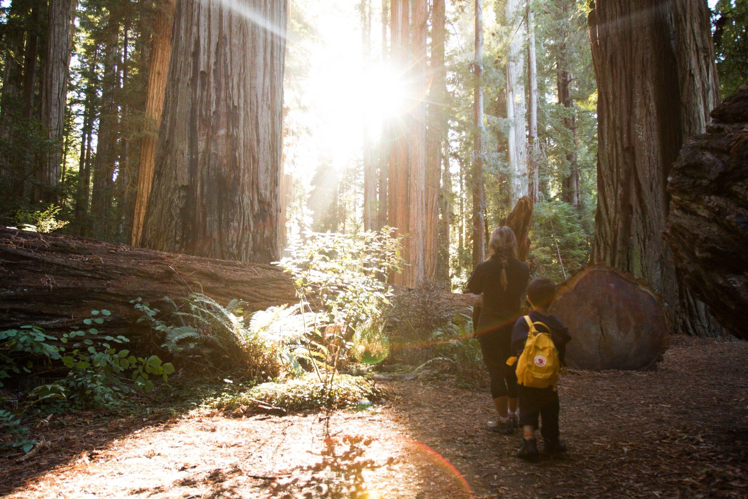 2018_Redwood-61.jpg