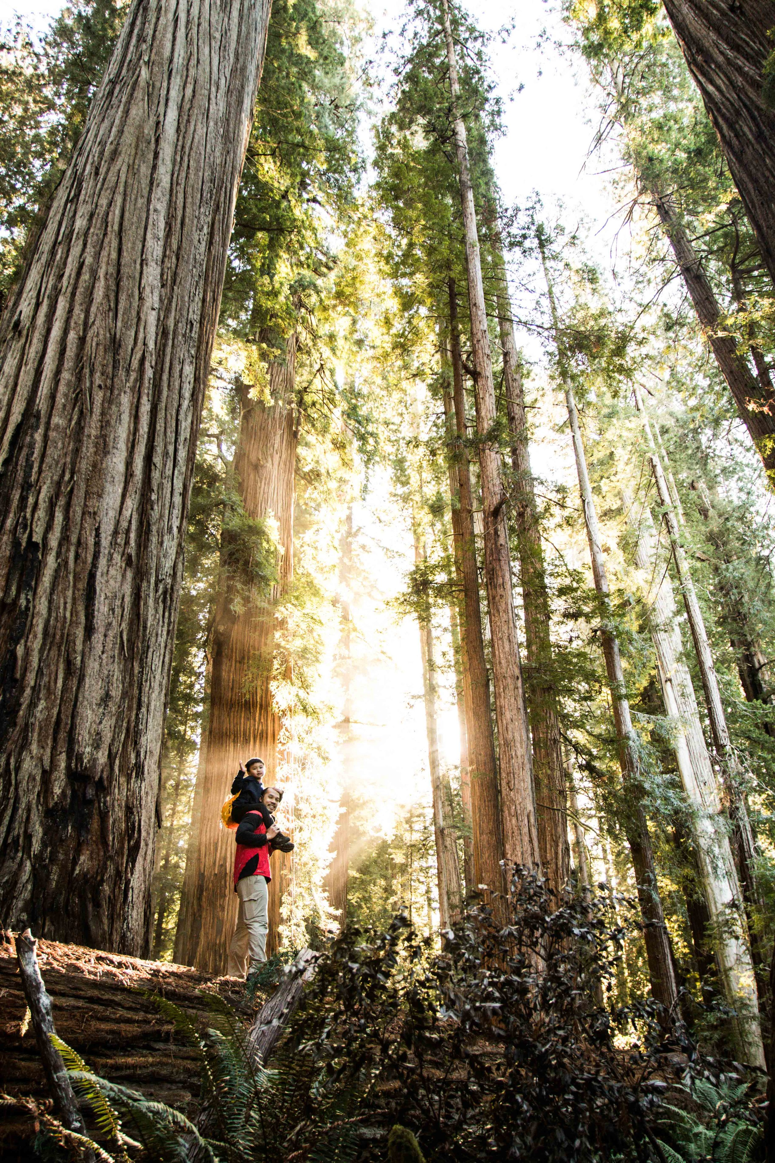 2018_Redwood-66.jpg