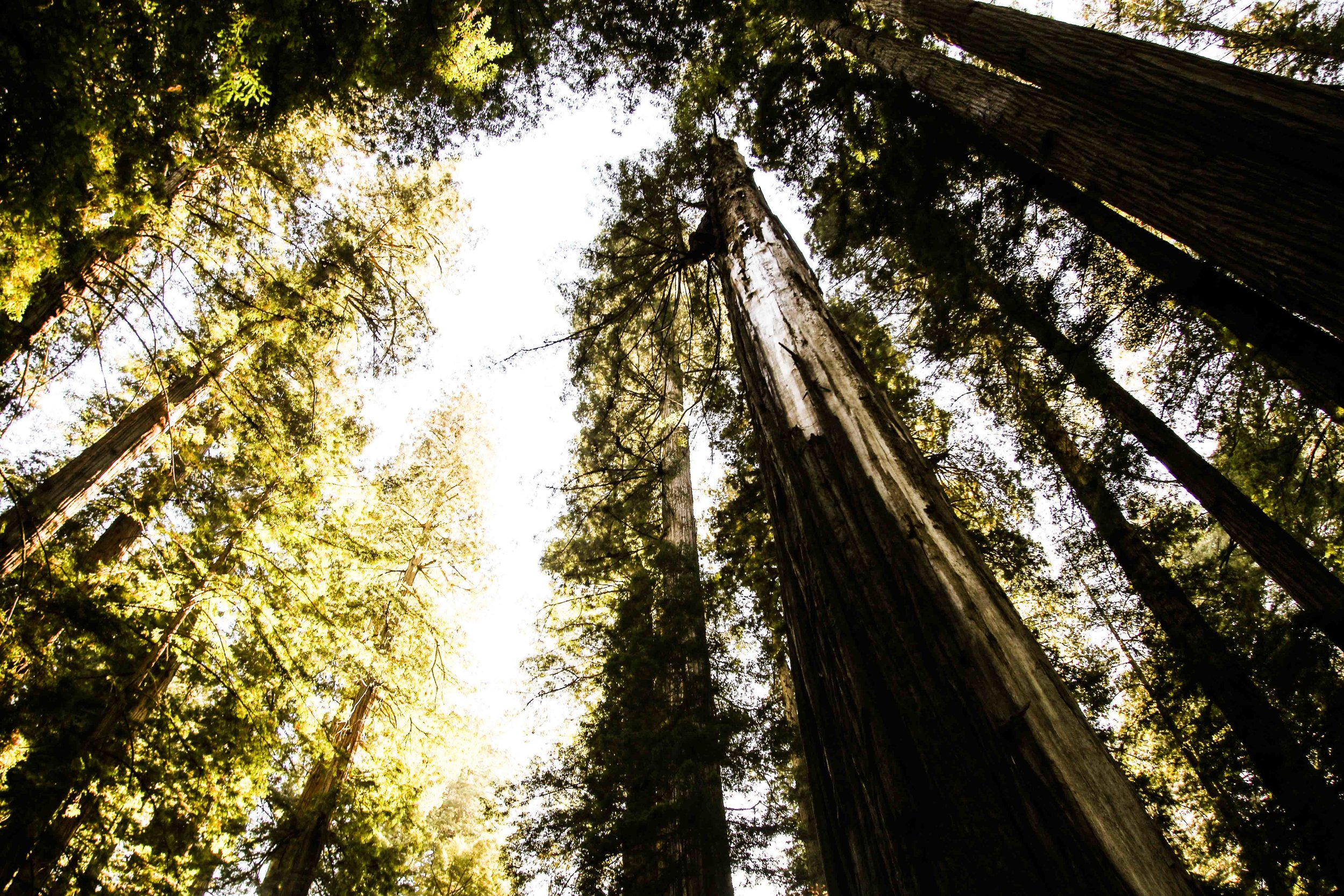 2018_Redwood-70.jpg