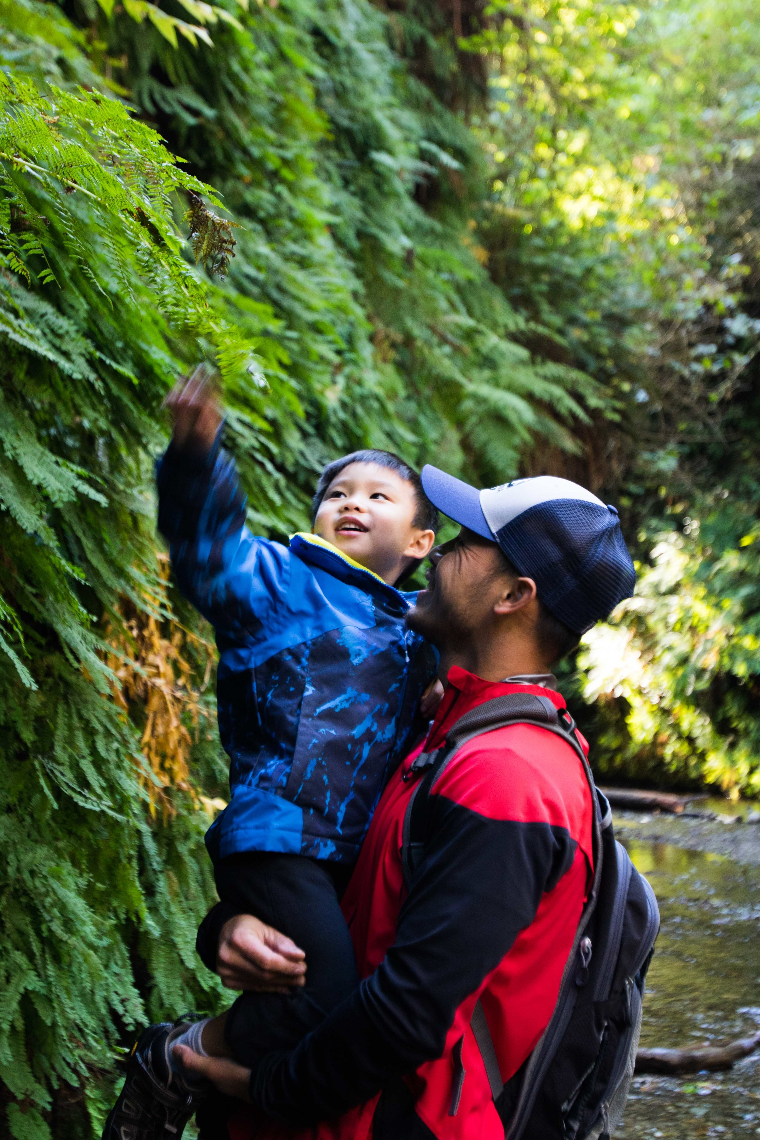 Fern Canyon -