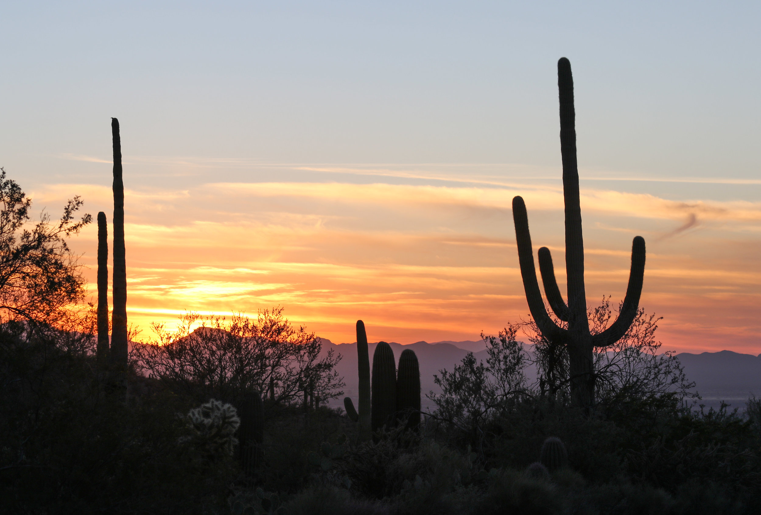 Saguaro - National Park